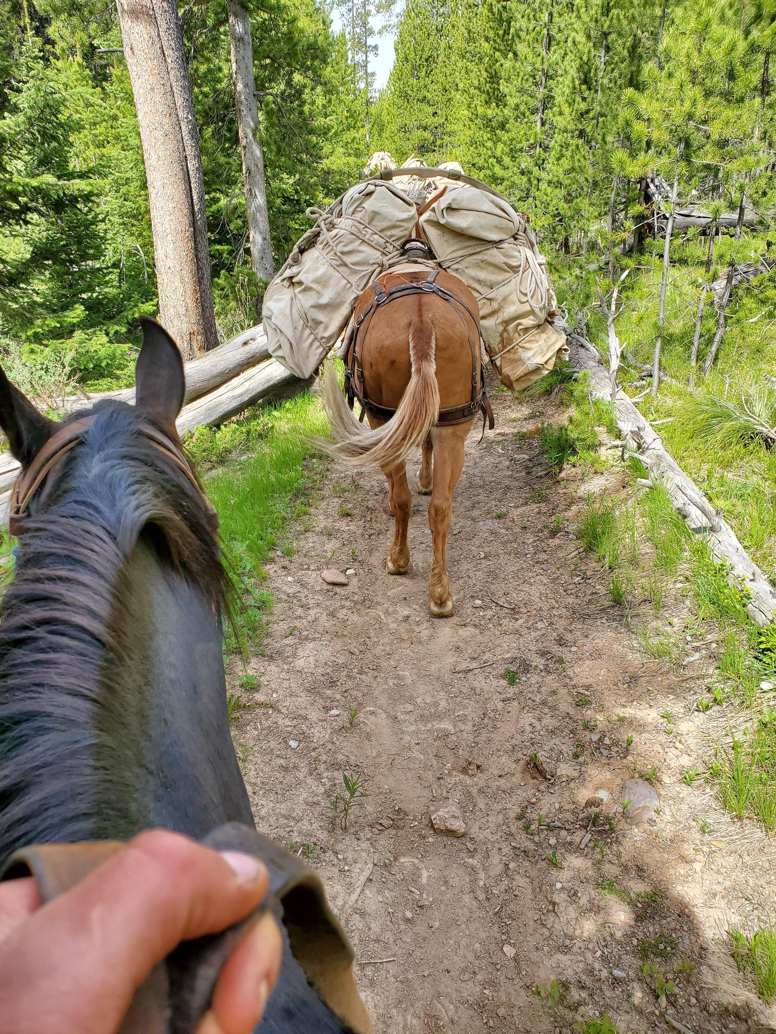 View from a horse. Matt Wilson.jpg