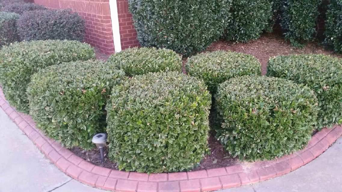 Hedge After