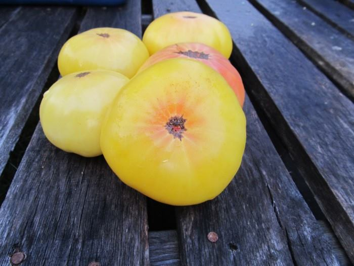 Summer Sunrise Tomato is a product of the collaborative Dwarf Tomato Project, which aims to breed great tasting, interesting, open-pollinated dwarf varieties. It yields big quantities of medium-sized pale yellow fruits with a pink star-burst. The flavor is tart, sweet, and full.