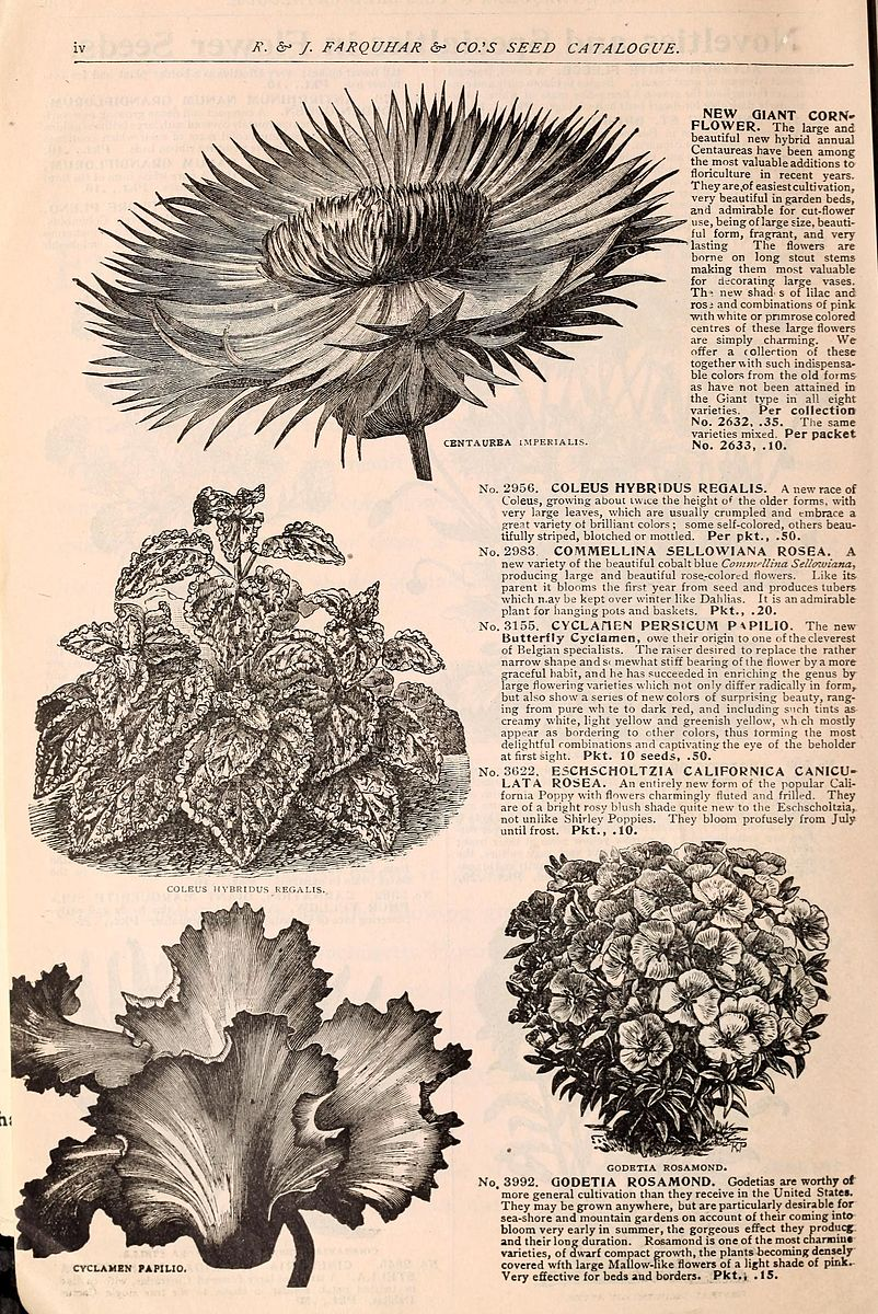 Henry G. Gilbert Nursery and Seed Trade Catalog Collection.; R. & J. Farquhar Company.    Source.