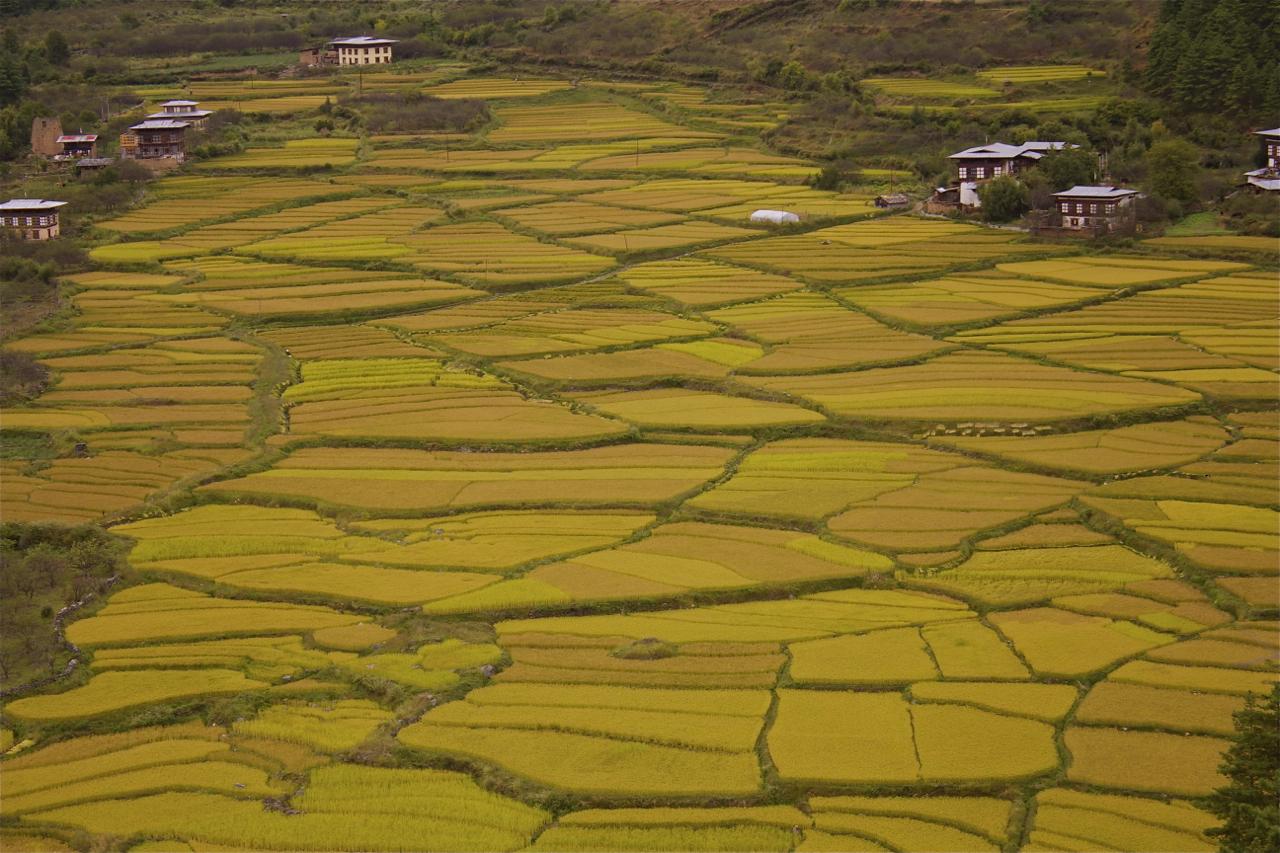 Fields of food in Bhutan Photo  by Tshering Lhamtshok