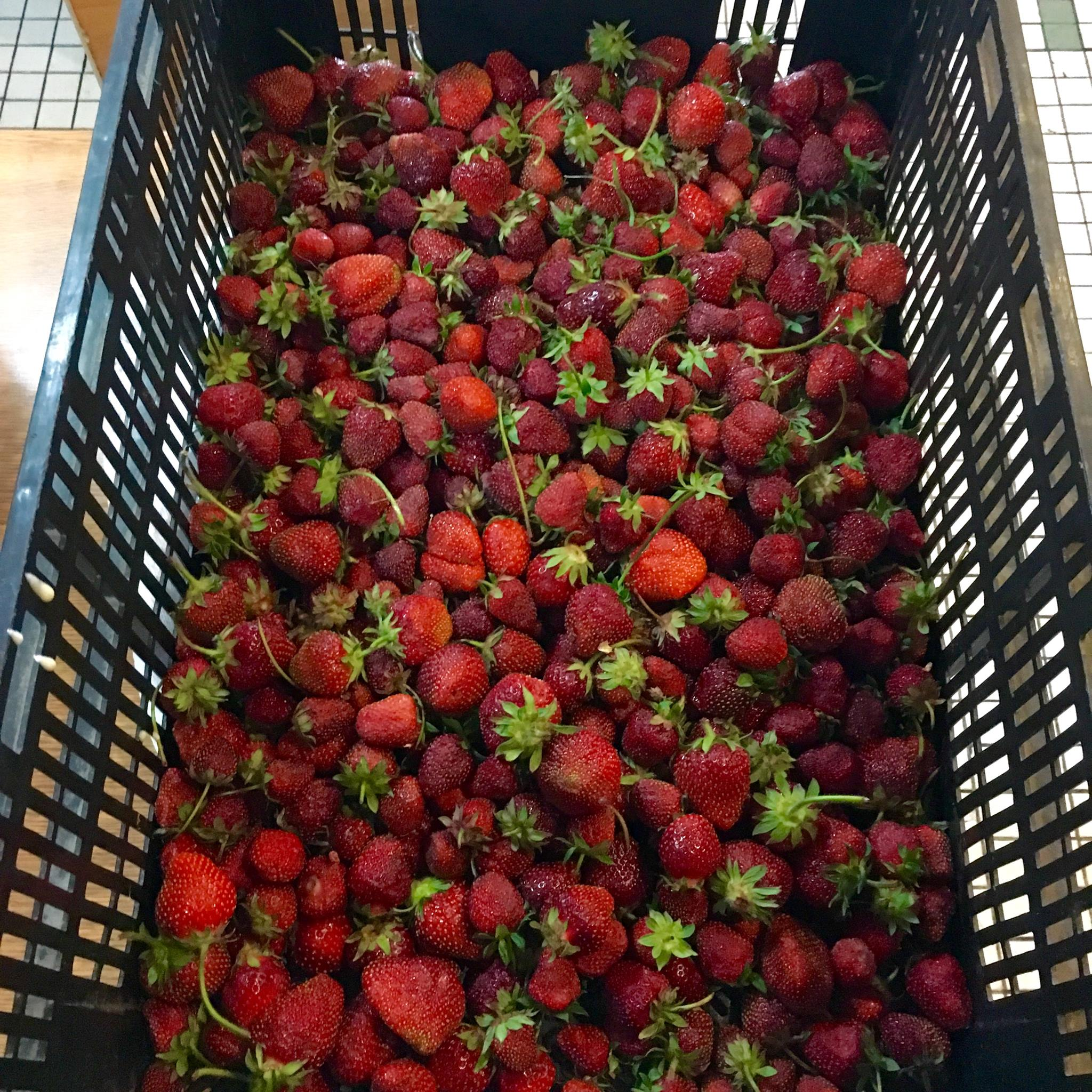 Detroit-grown strawberries from Buffalo St. Farm for Russell Street Deli's strawberry preserves.