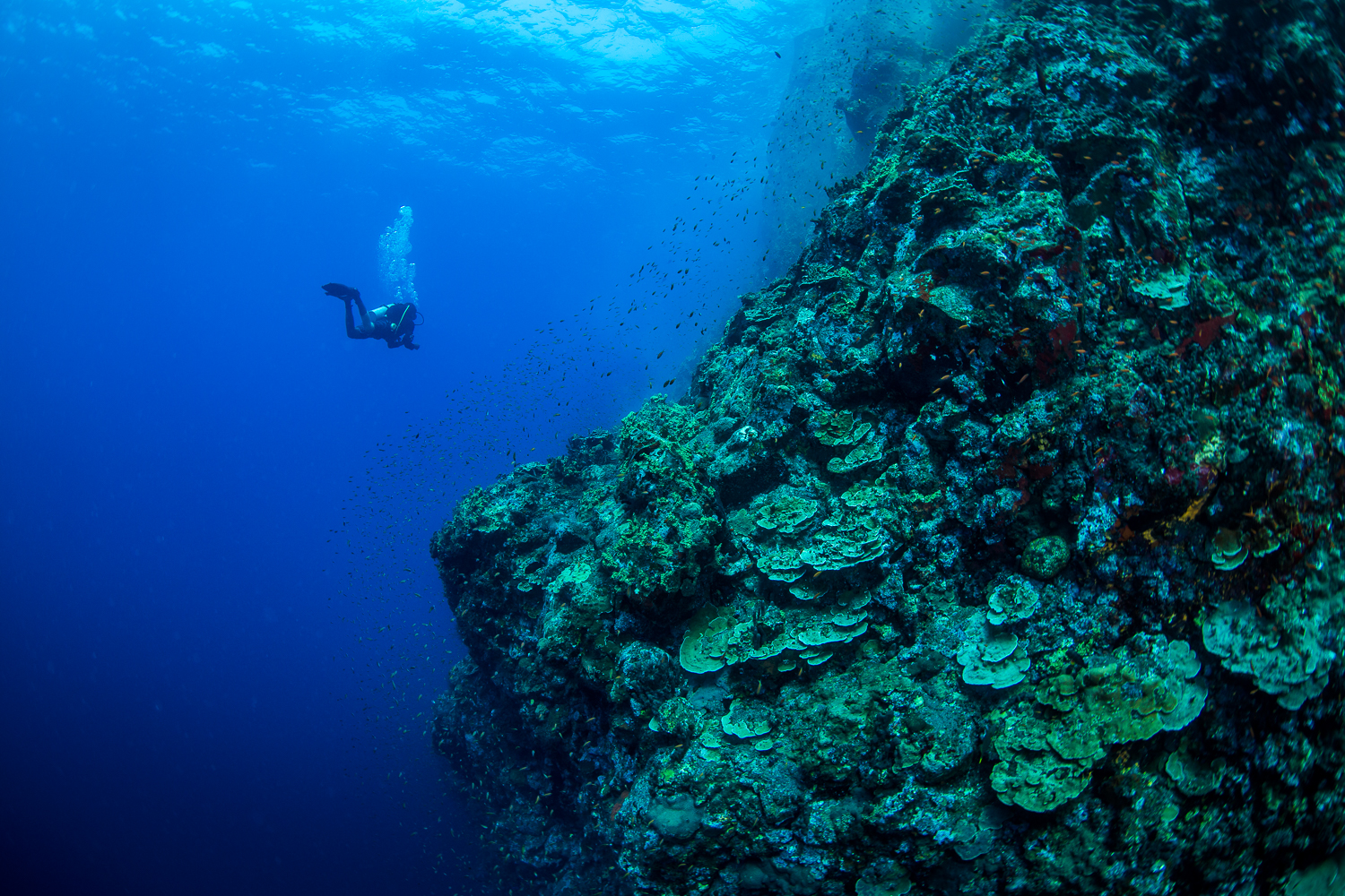 A diver hangs effortlessly off a steep wall at dive site Black Magic at Barren Island, Andaman Sea, India