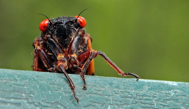 ignite360-work-from-home-cicada.jpg