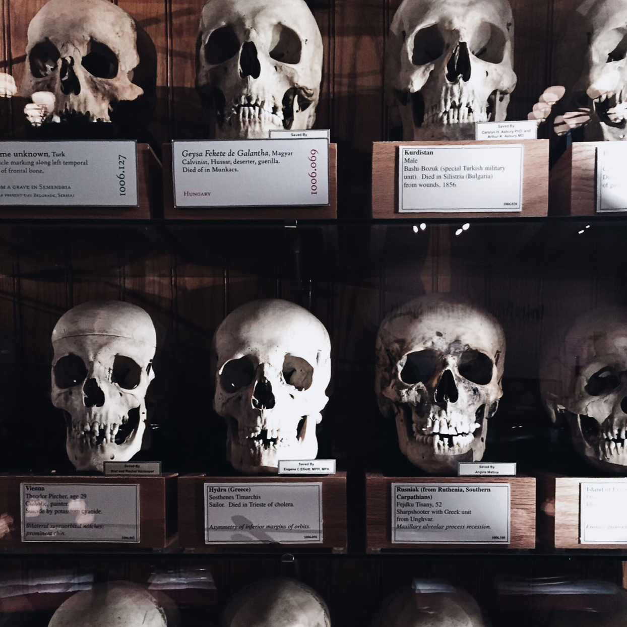 MÜTTER MUSEUM | TRAVEL  May 2015