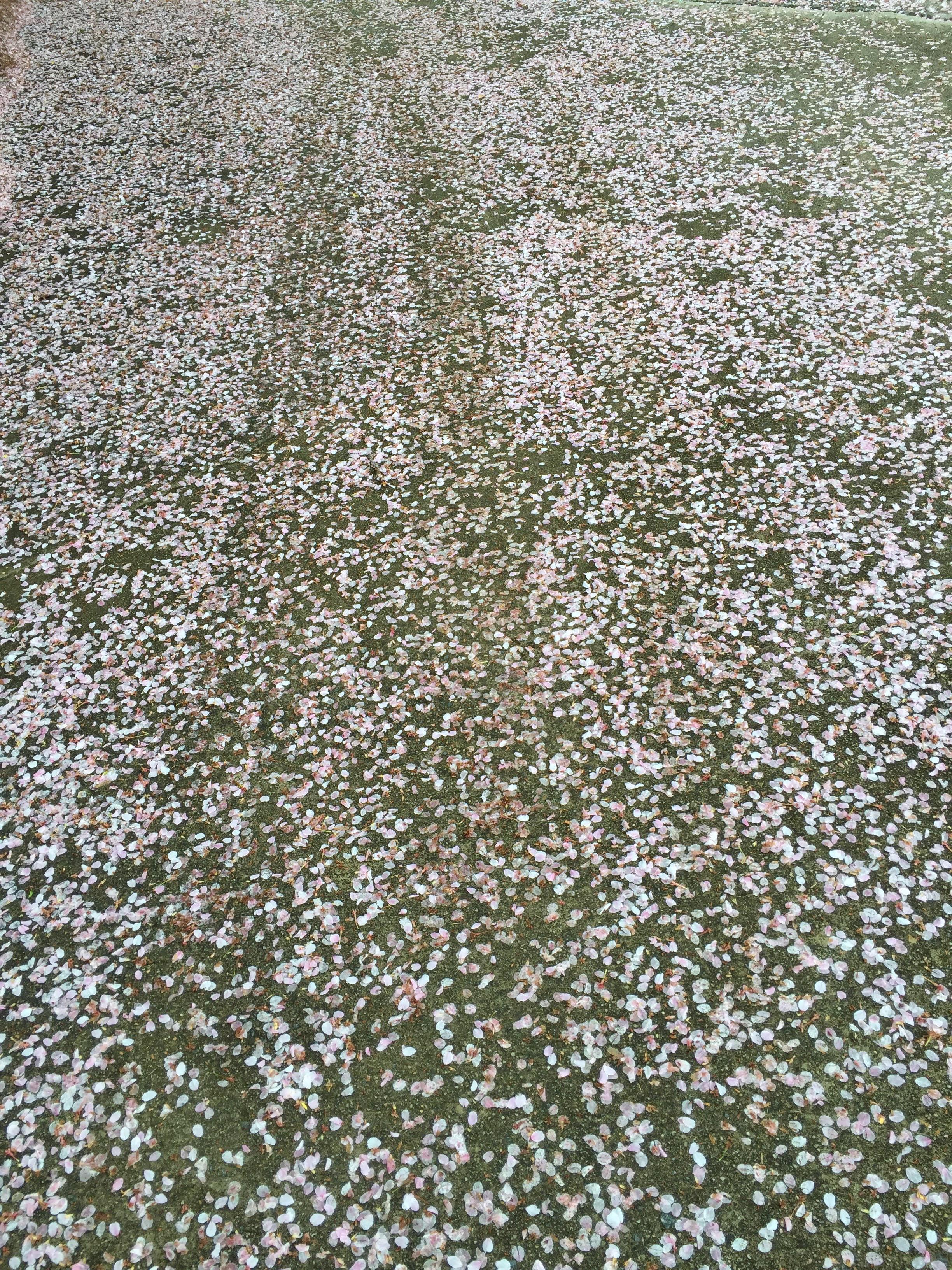 flowers-on-driveway.jpg