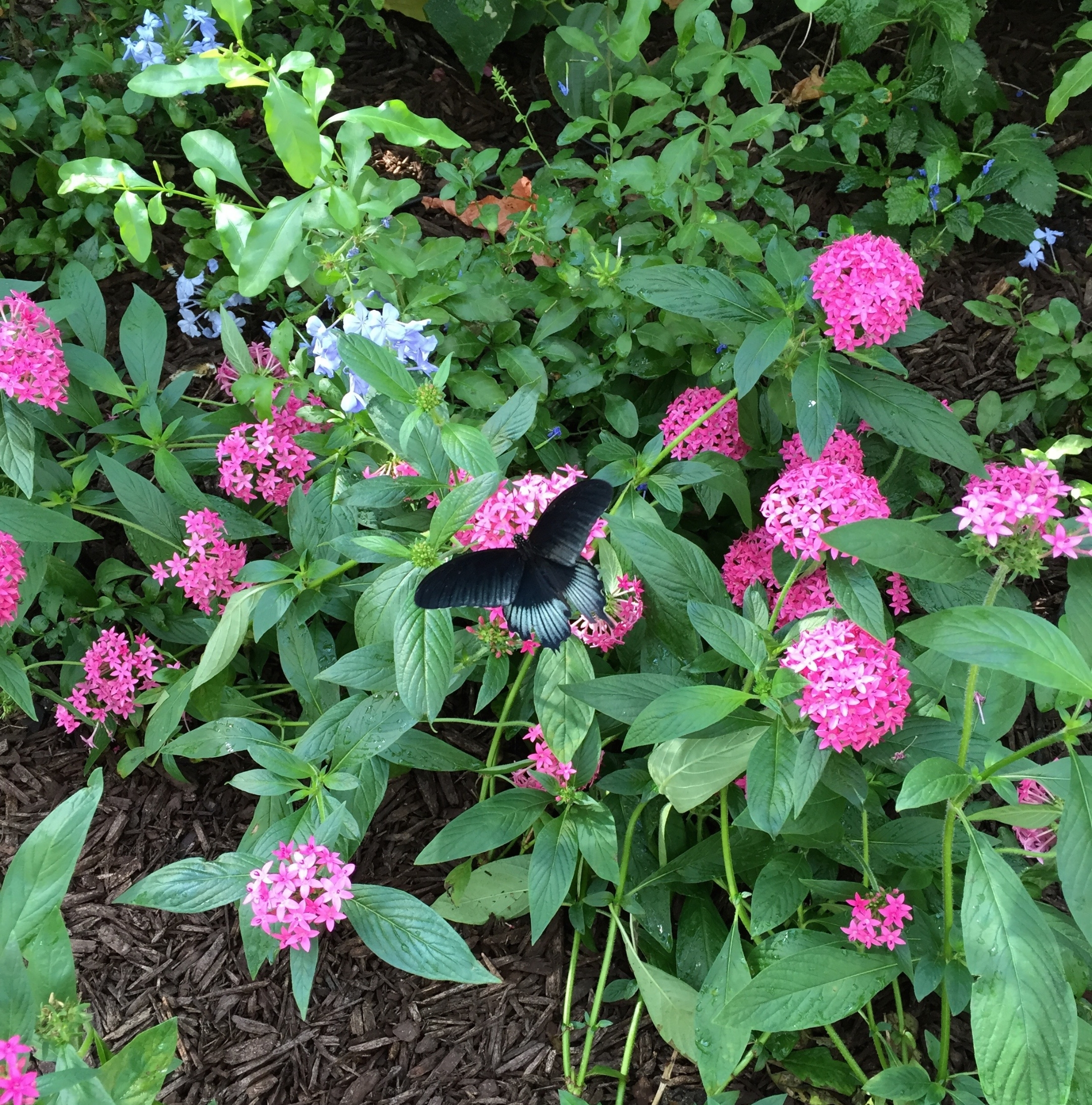 butterfly-on-flowers.jpg