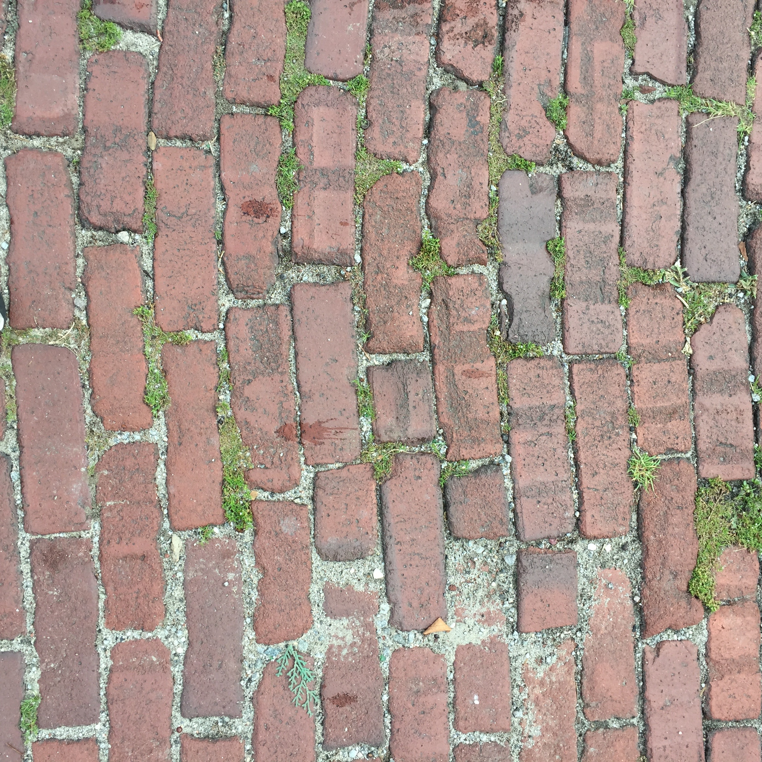 Life among the old brick pavers in the alley outside our back door.