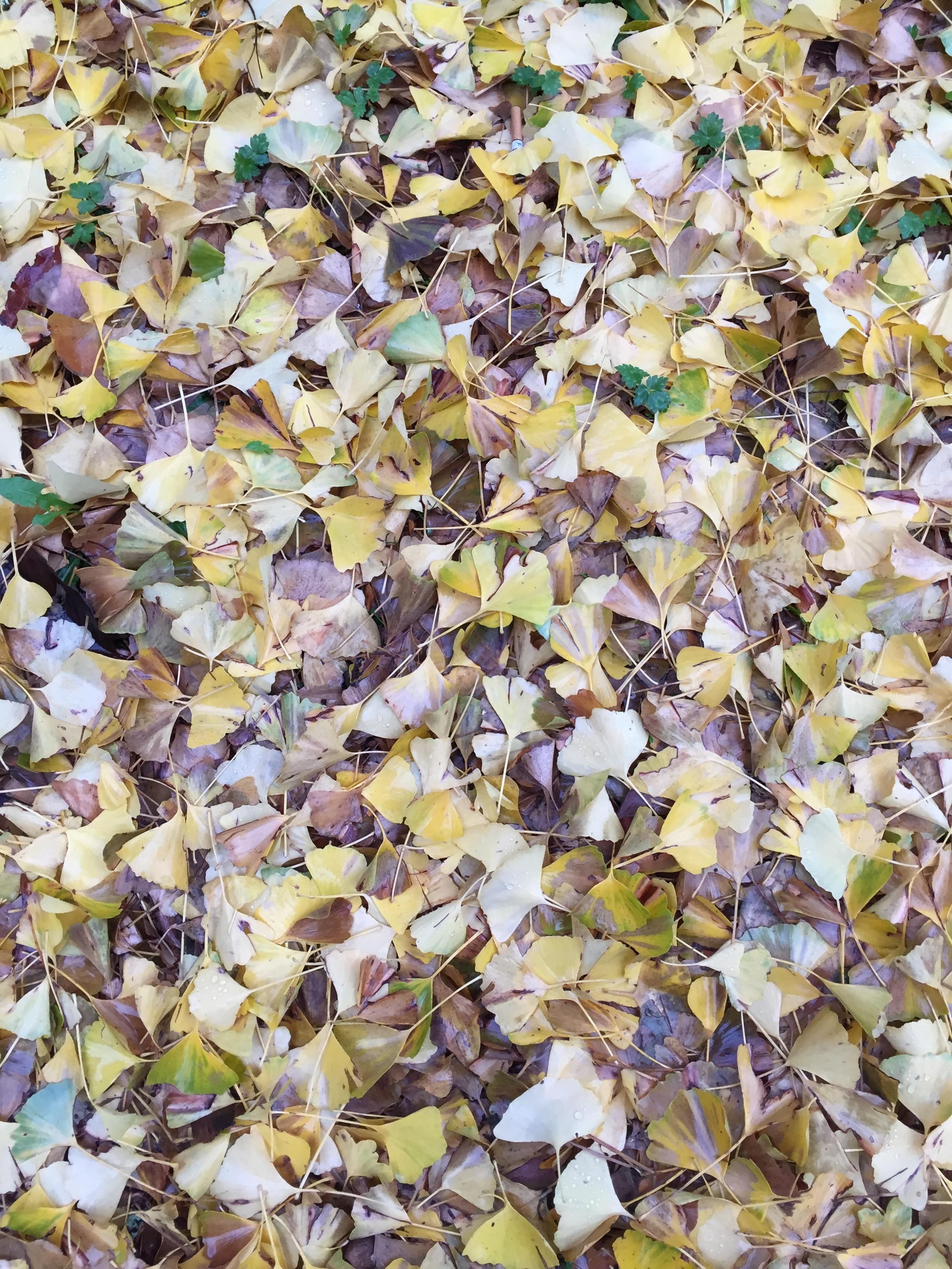 yellow-leaves-on-ground.jpg