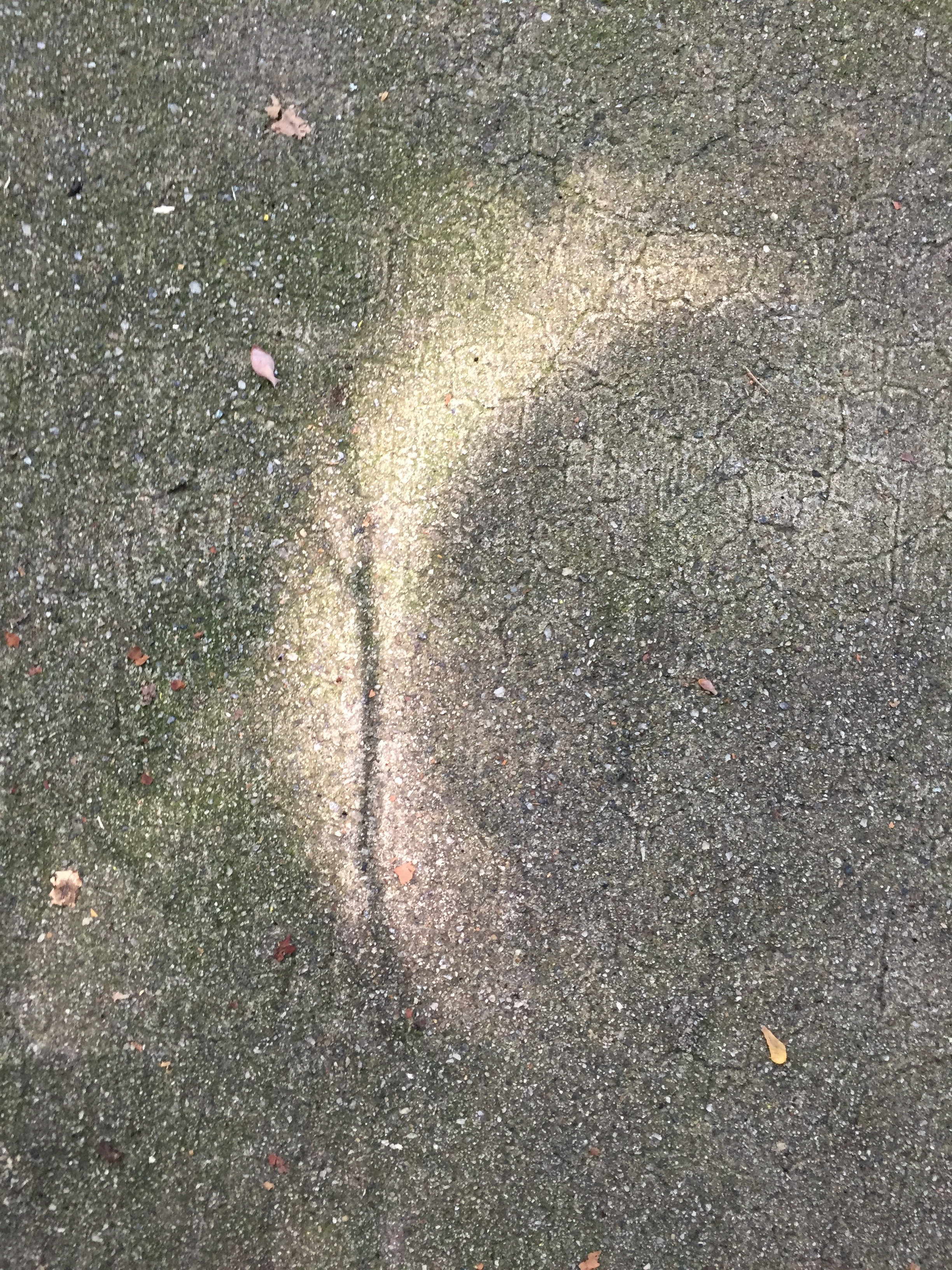 moon-shadow-on-driveway.jpg