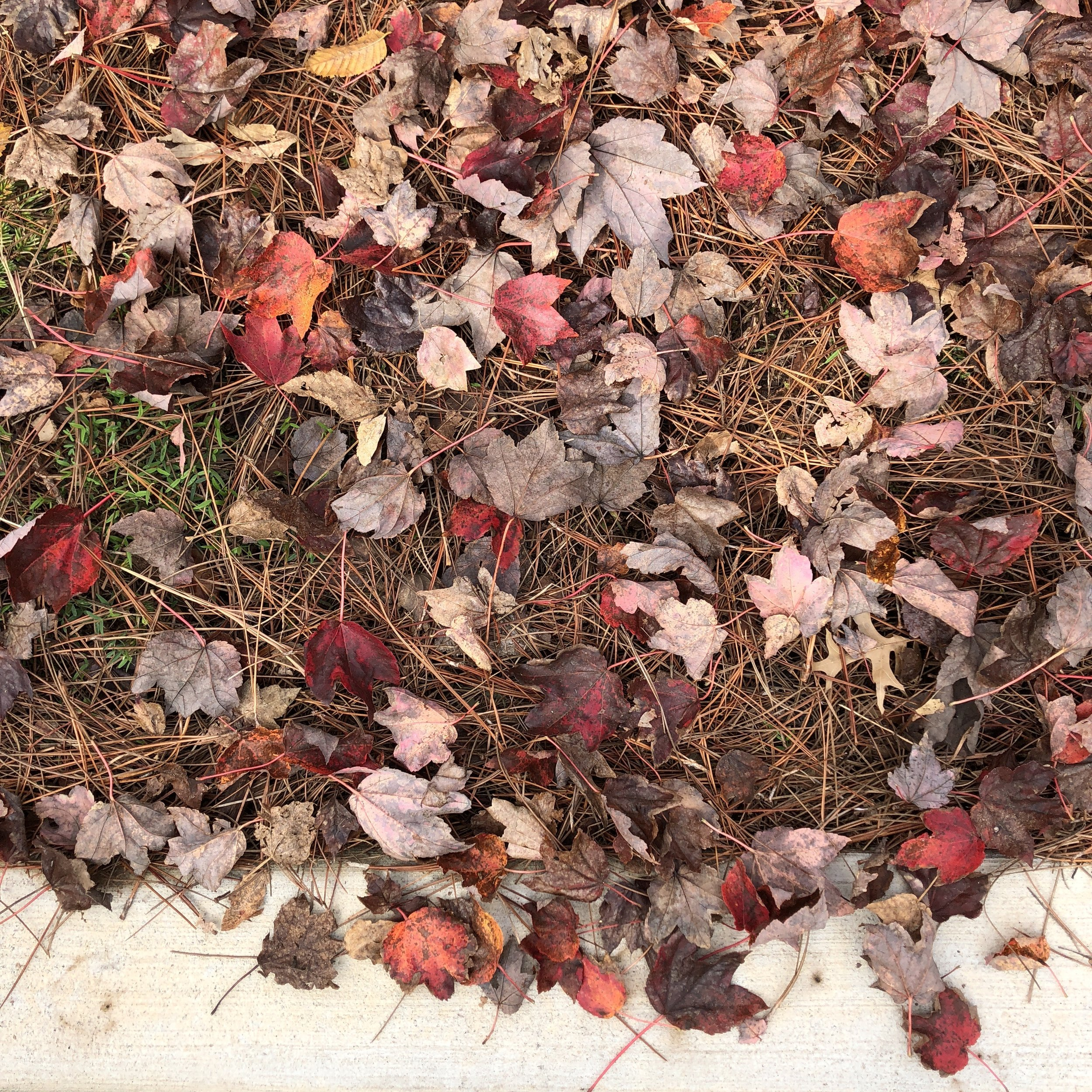 At the curb in front of a sandwich shop where I like to write. Red leaves make me stop every time.