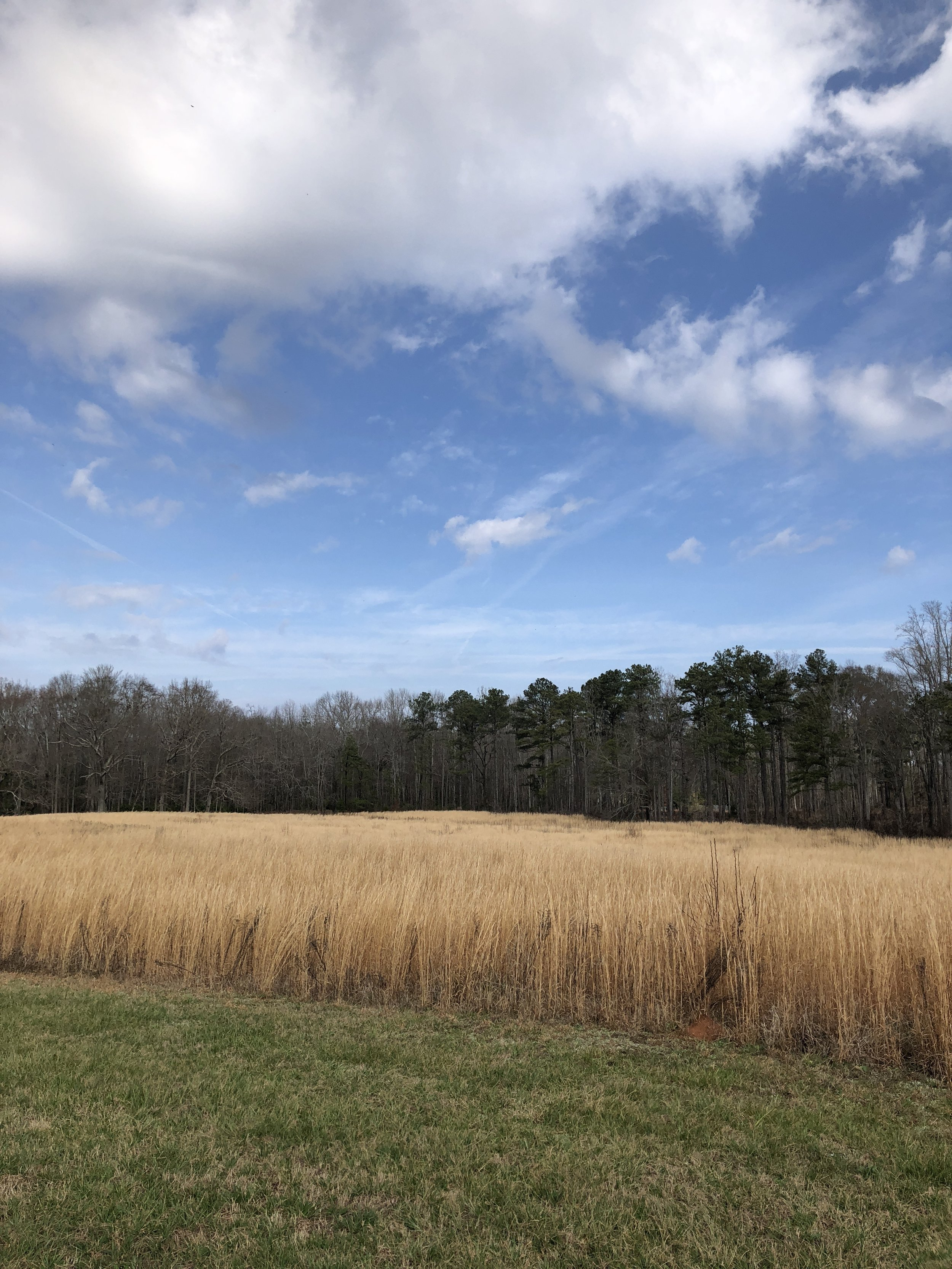 Along the entrance parkway. Tall grasses that sway and ripple in the breeze.