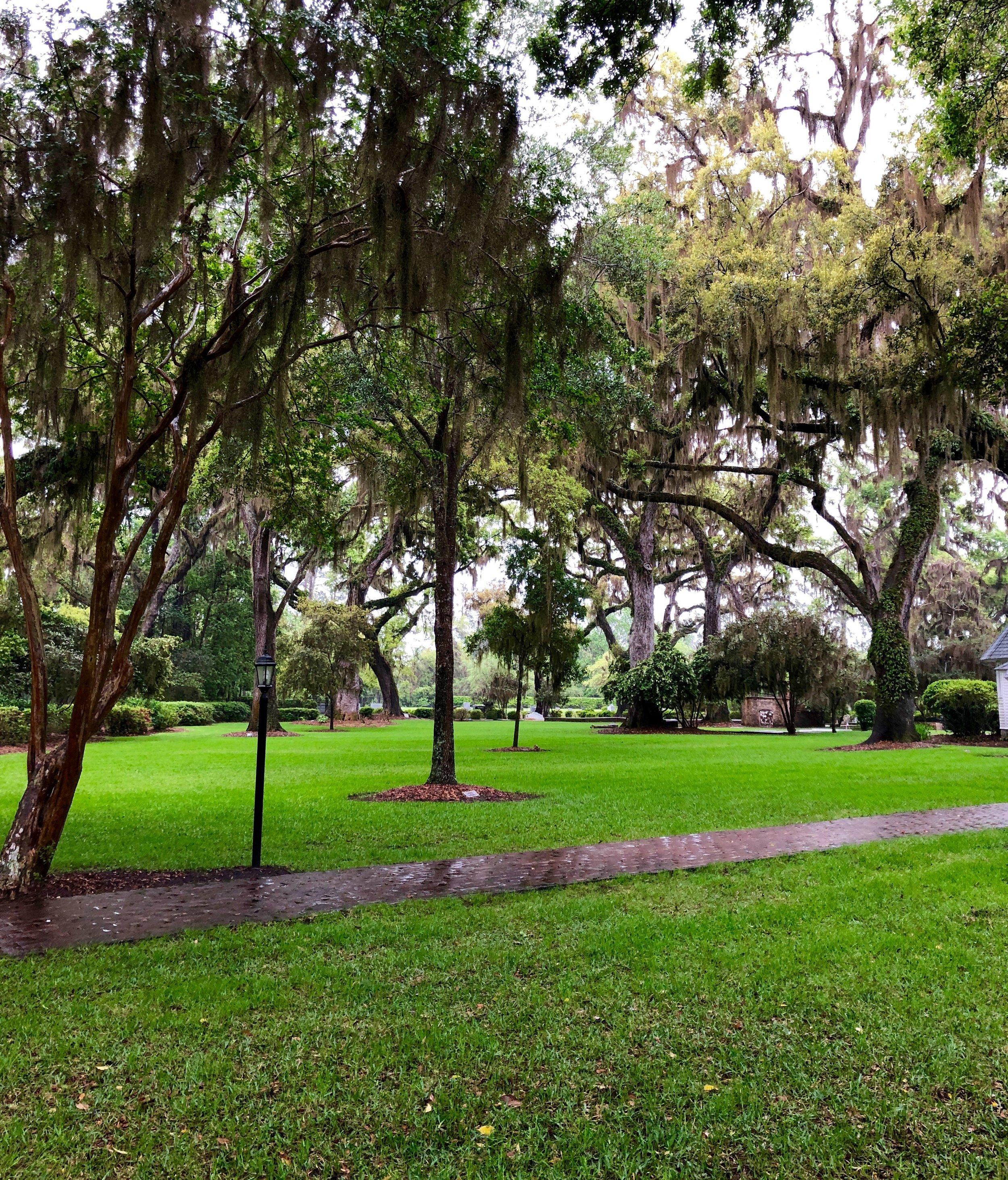 trees-grass-rain.jpg