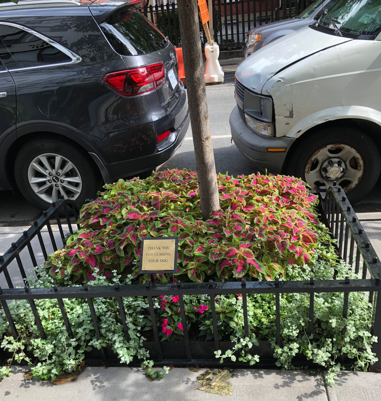 Glimsen-NYC-curb-garden.jpg