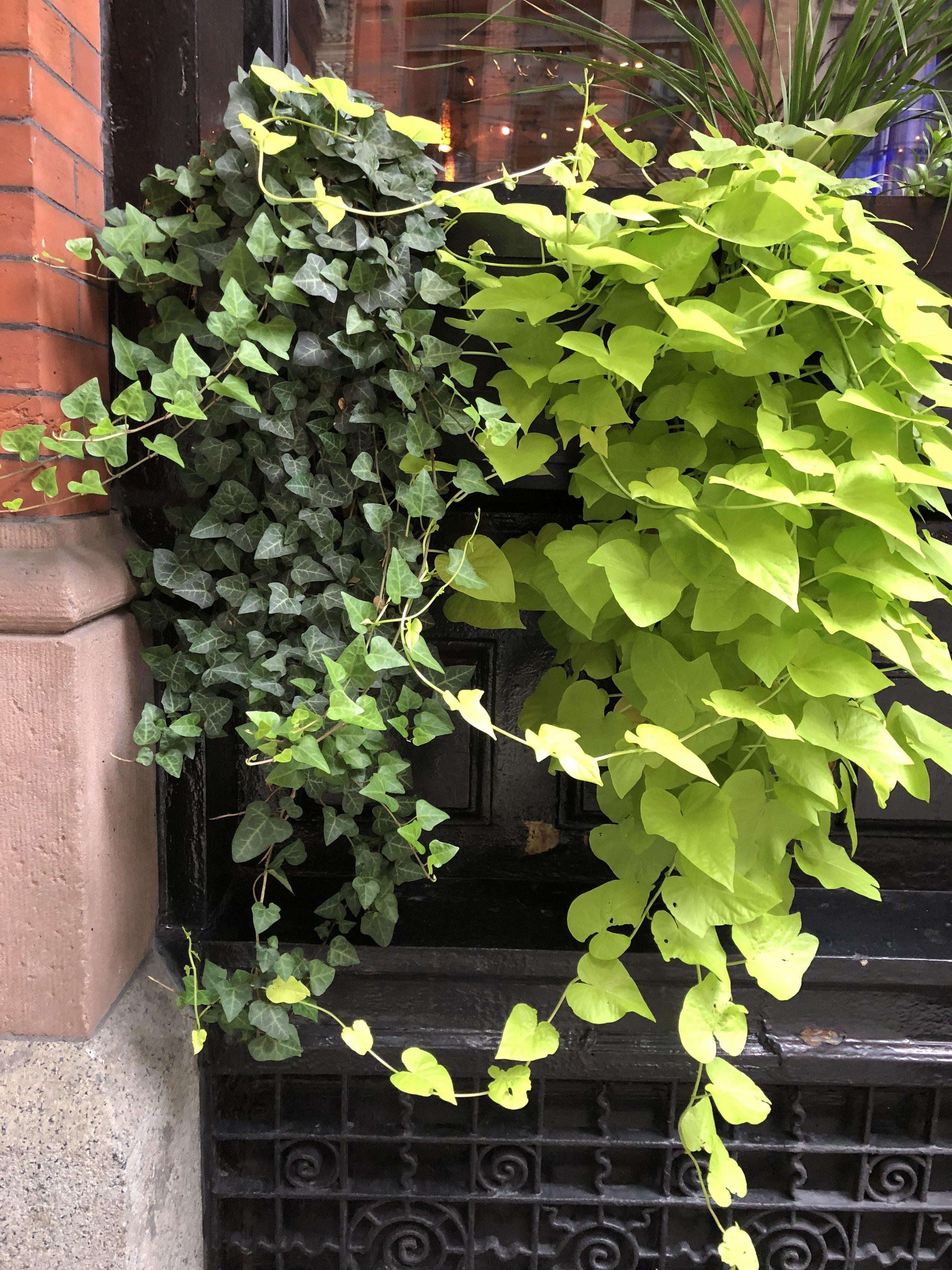 Glimsen-NYC-hanging-green.jpg