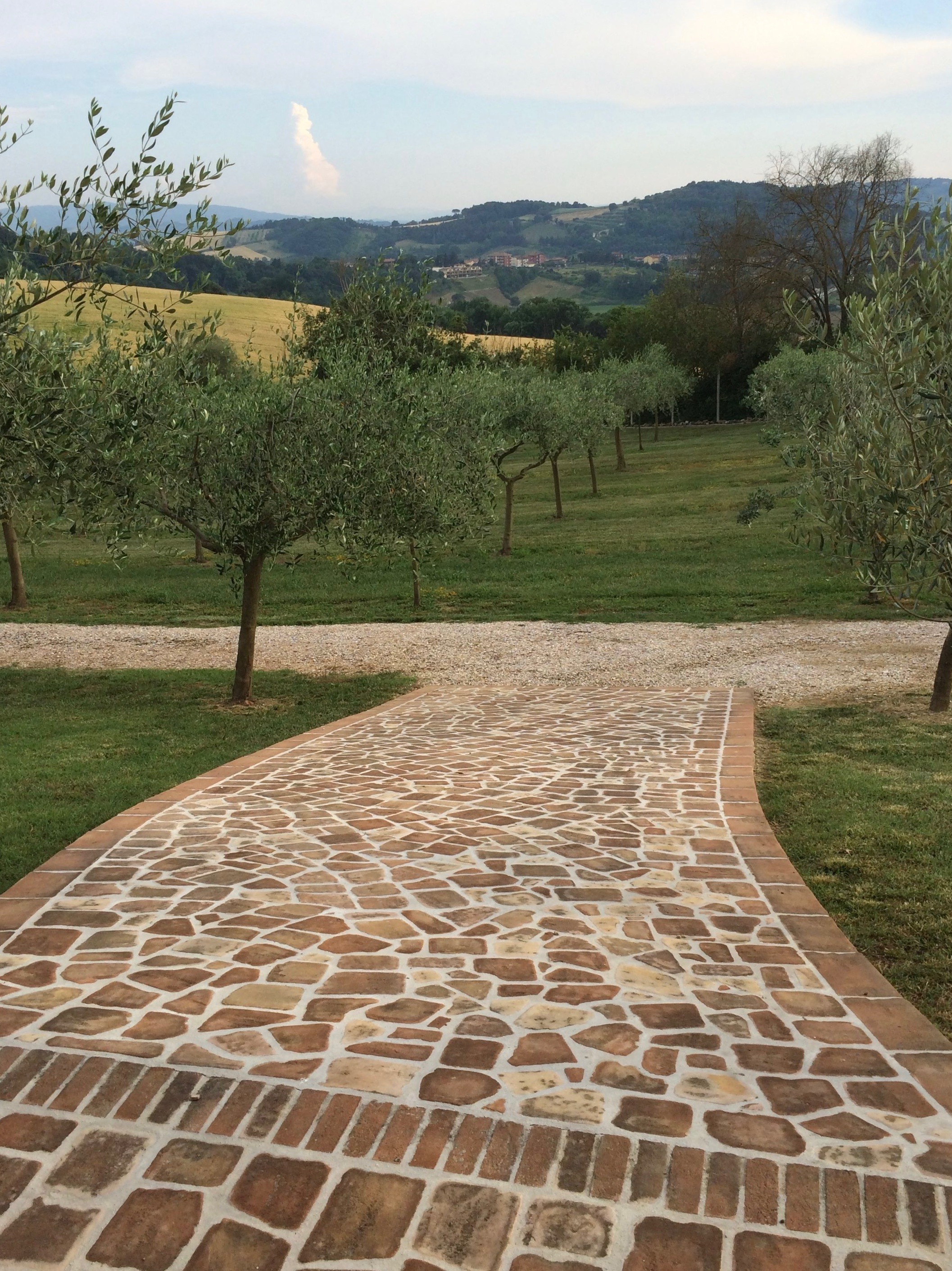 Our friends' olive grove in Umbria, Italy
