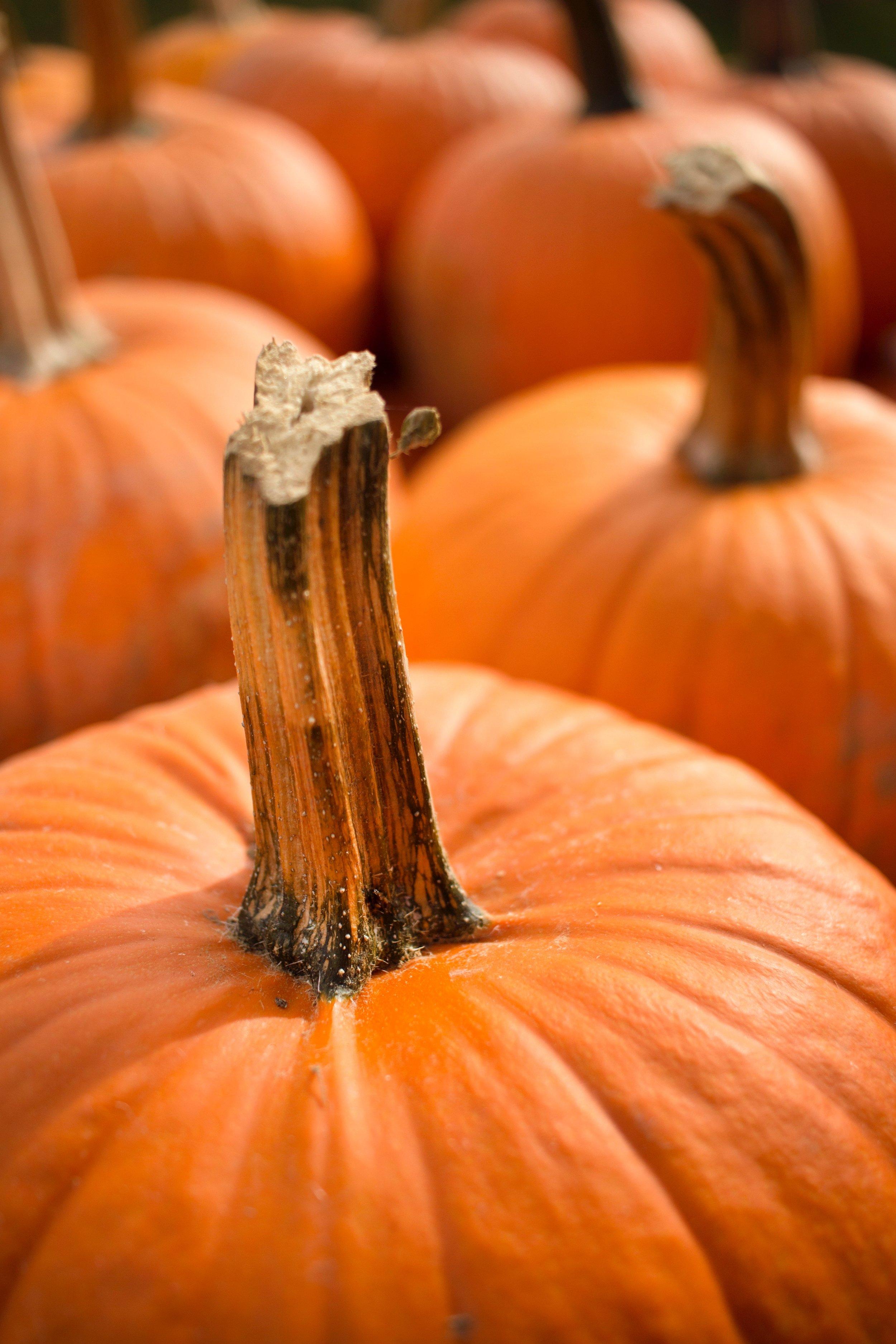 Glimsen-pumpkins.jpg