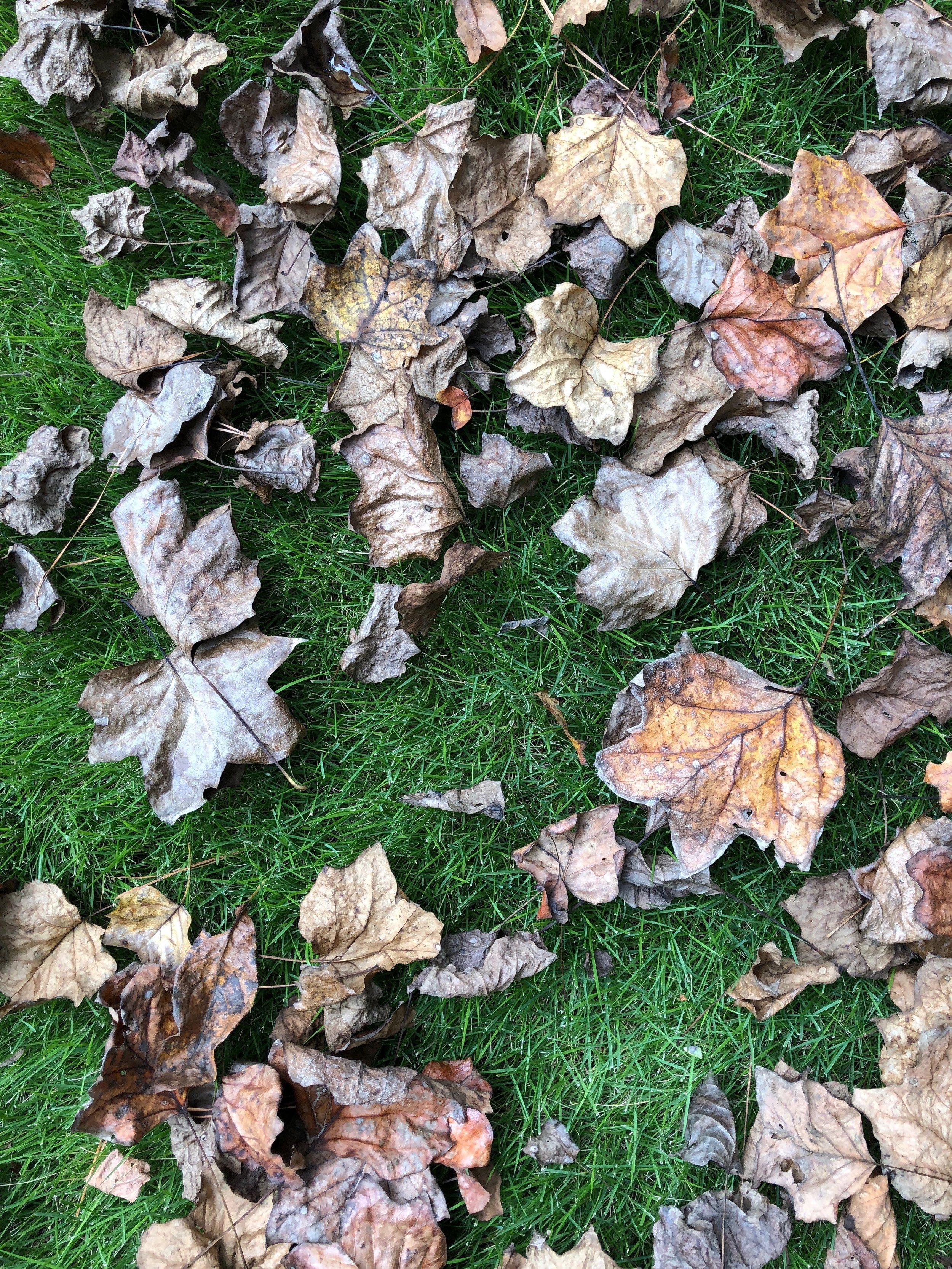 glimsen-brown-leaves-grass.jpeg