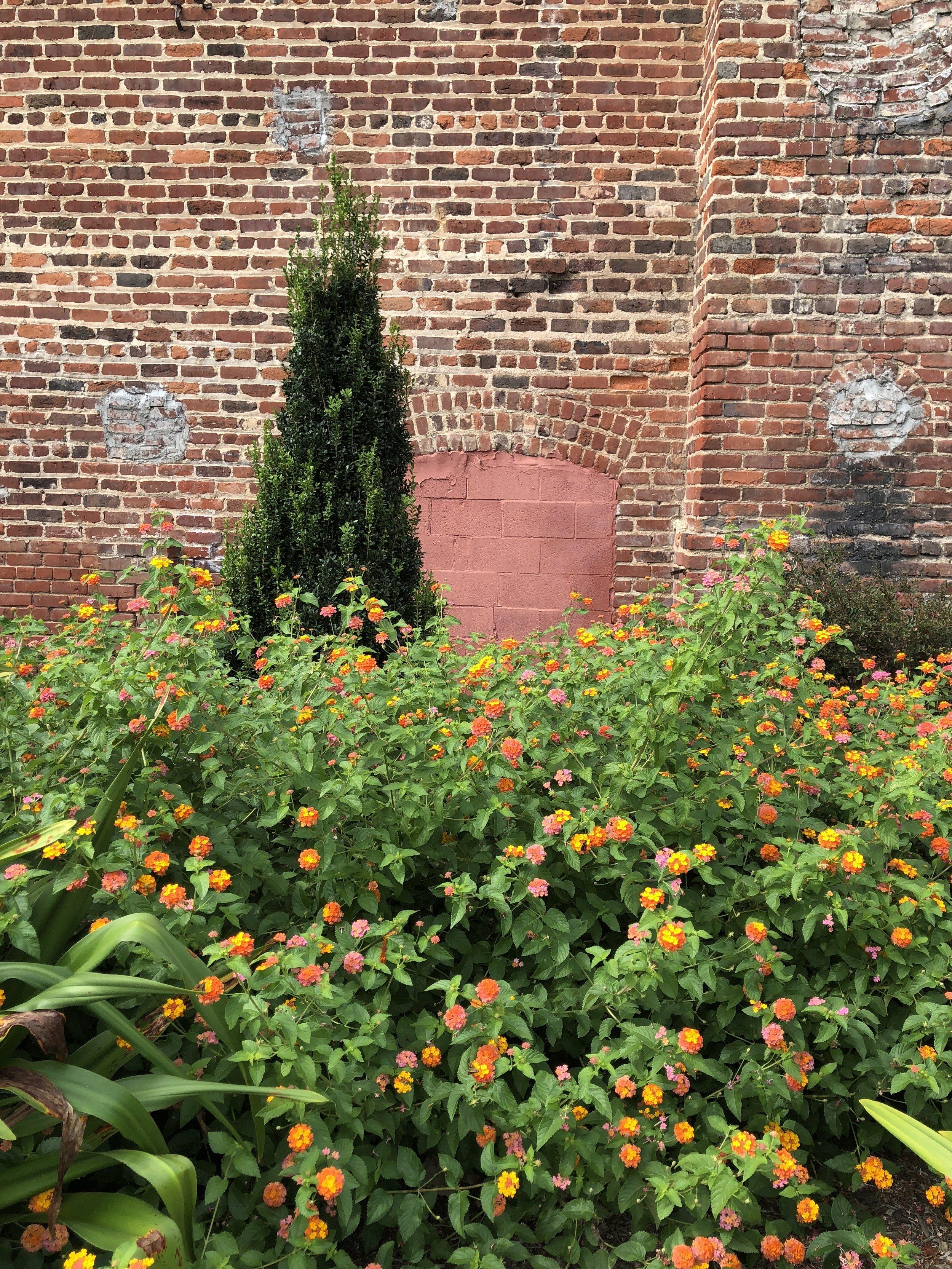 Glimsen-lantana-brick-wall.JPG