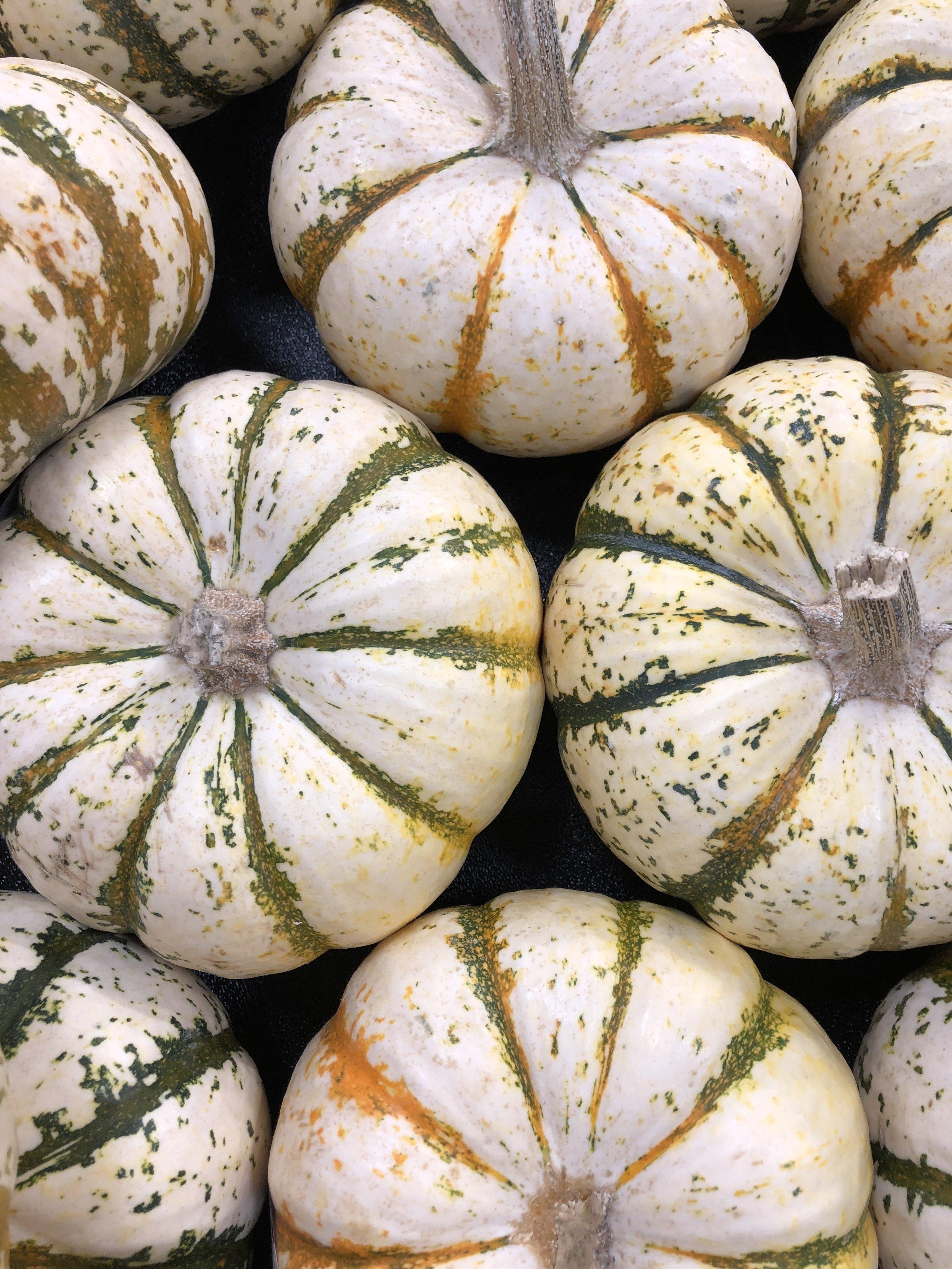 Glimsen-white-gourds.JPG