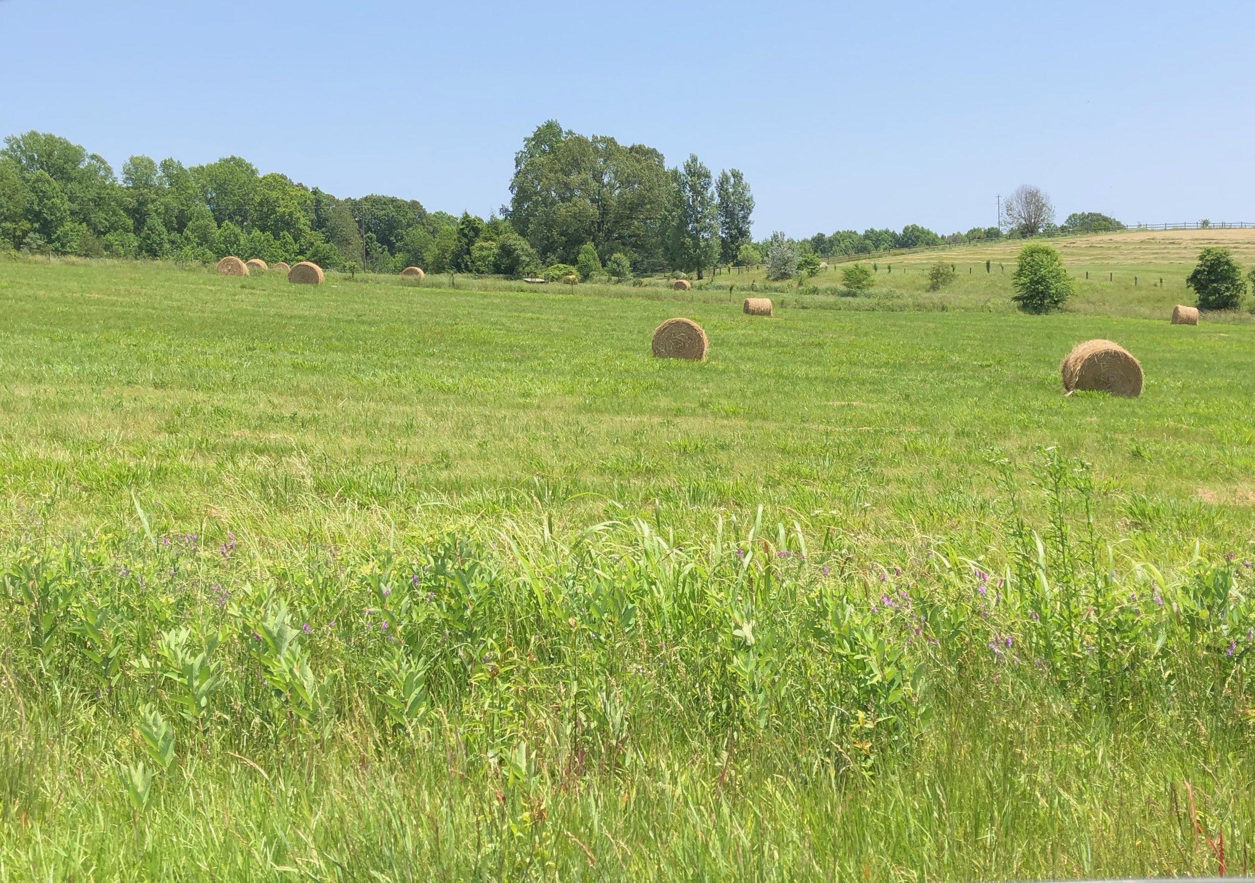 glimsen-farm-hay-1.jpeg
