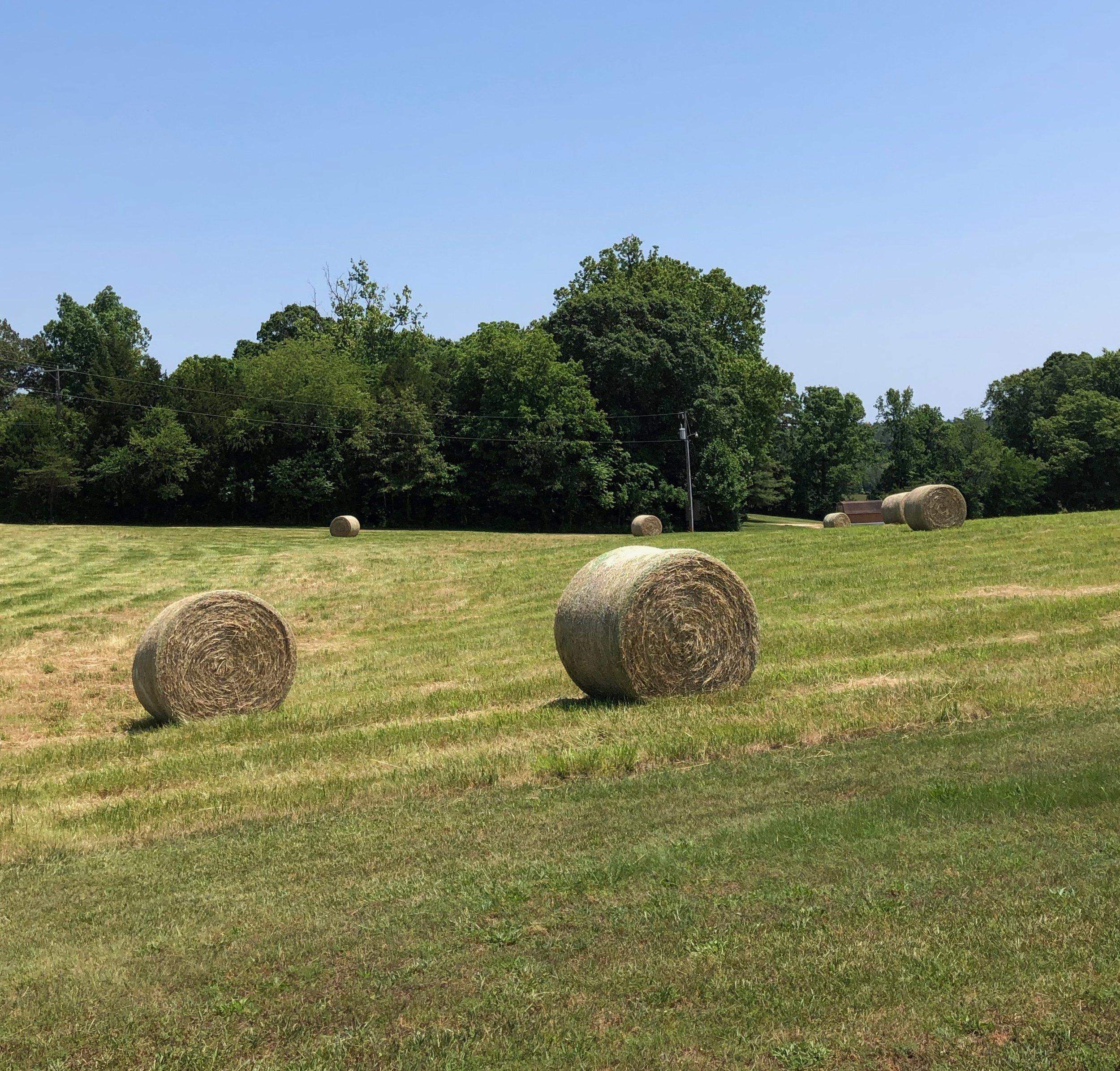 Glimsen-farm-hay2.jpeg