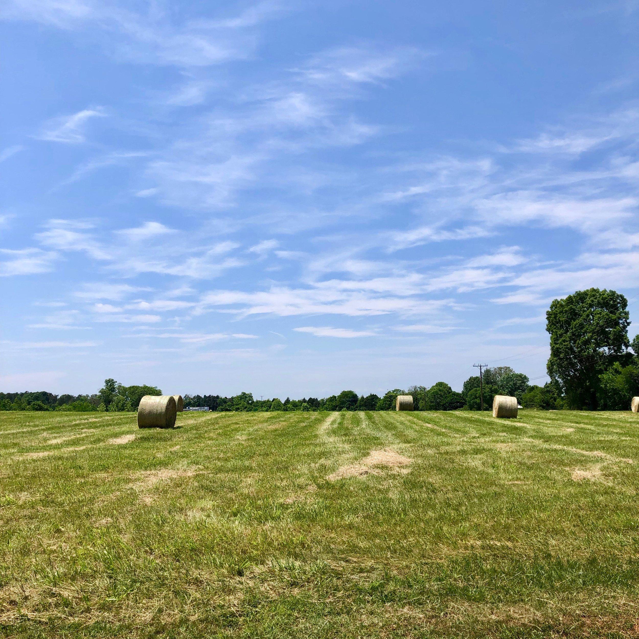 Glimsen-farm-hay3.jpeg
