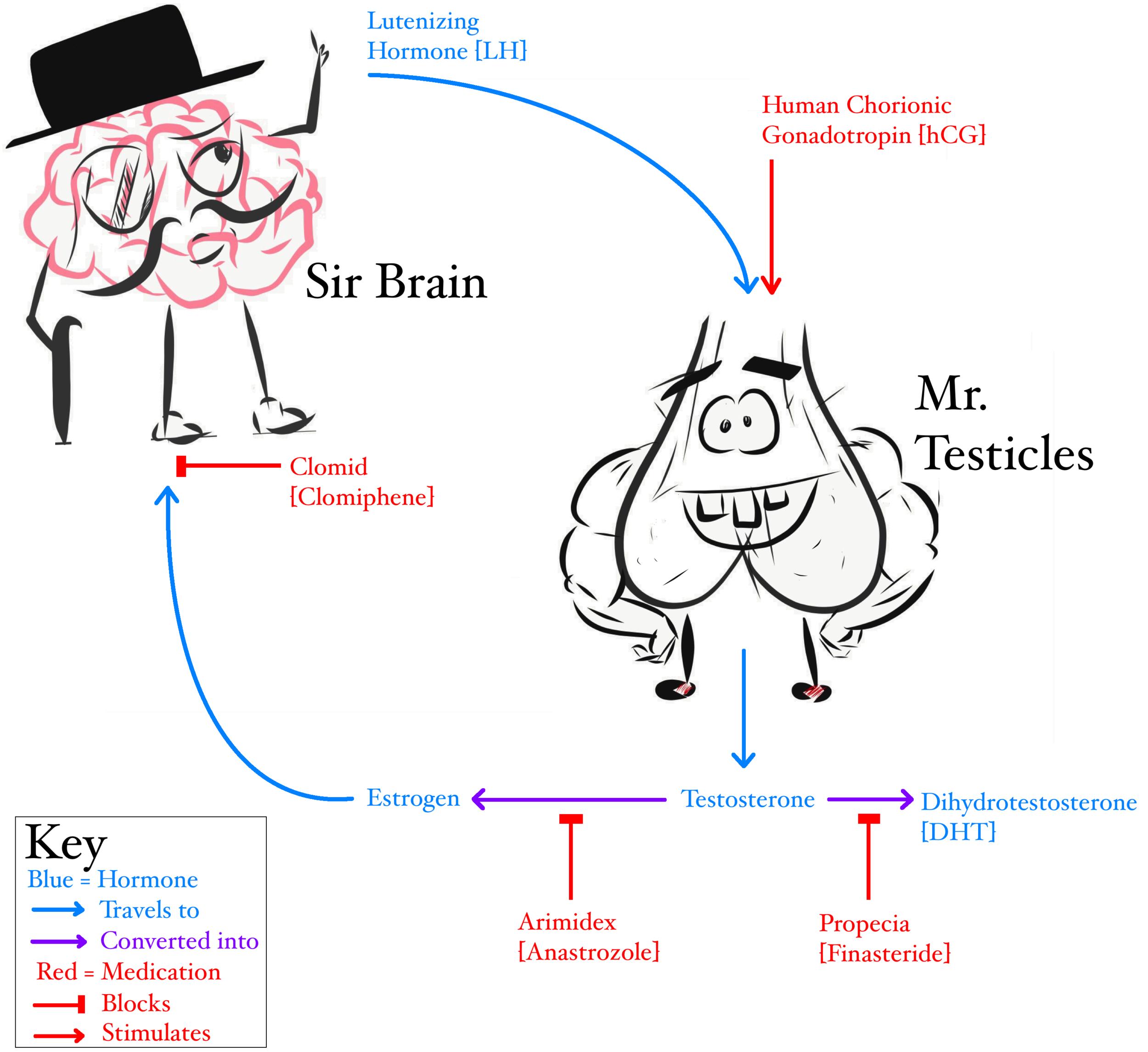 Sir Brain & Mr  Testicles — Doctor K Private Medicine