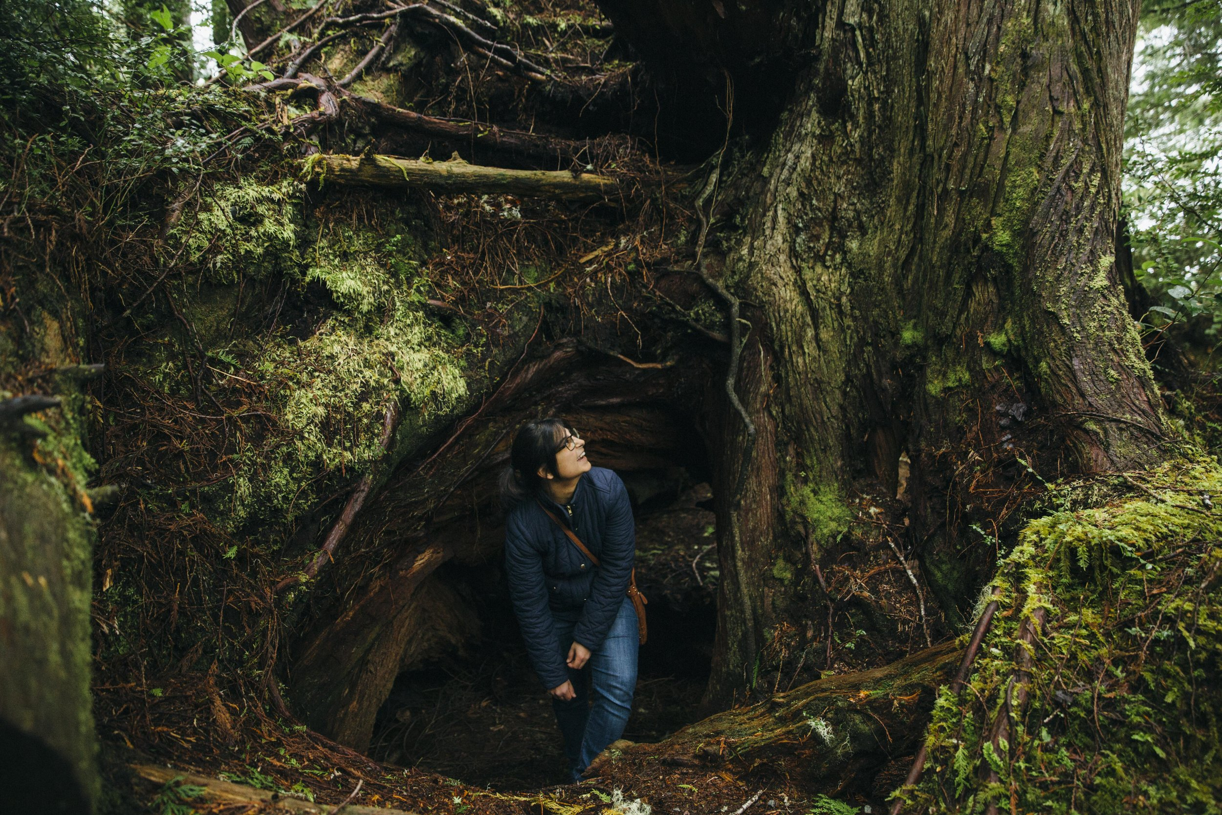 Tree bigger than woman in Tofino