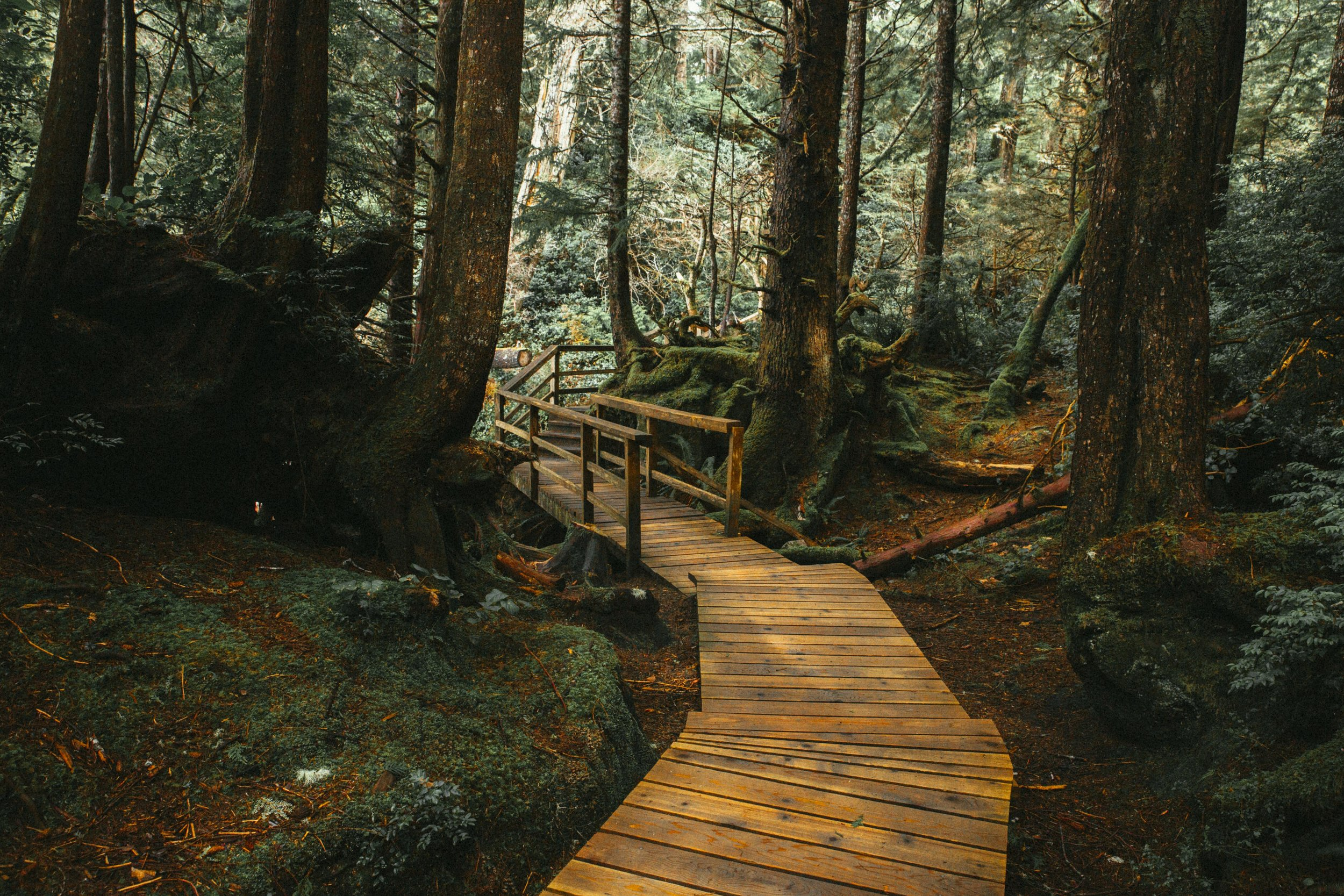 Boardwalk in Tonquin park Tofino Canada