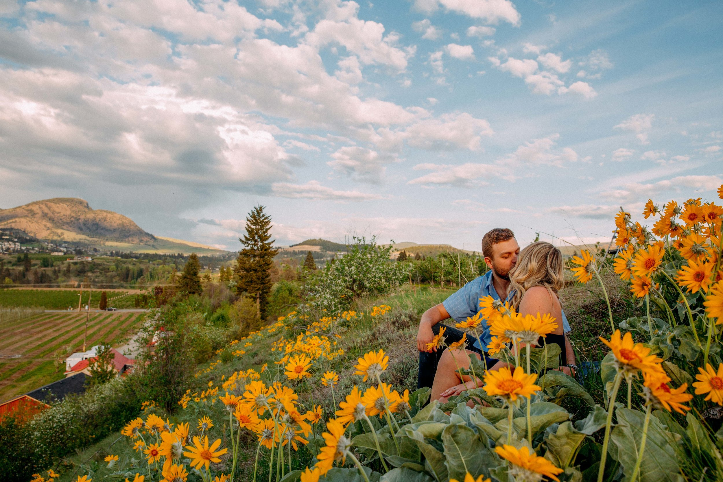 Arrowleaf Balsamroot engagement photographs
