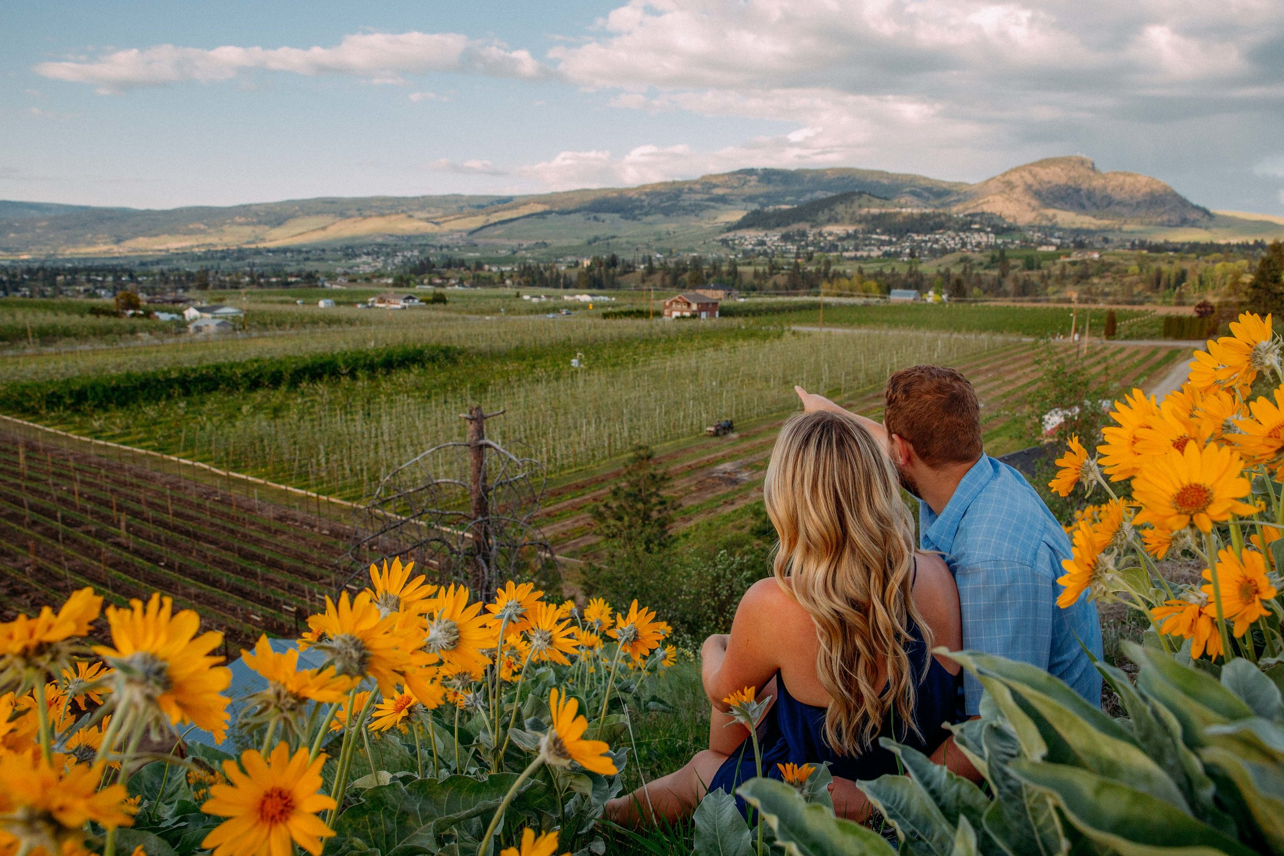 arrowleaf balsamroot engagement photographs in Kelowna