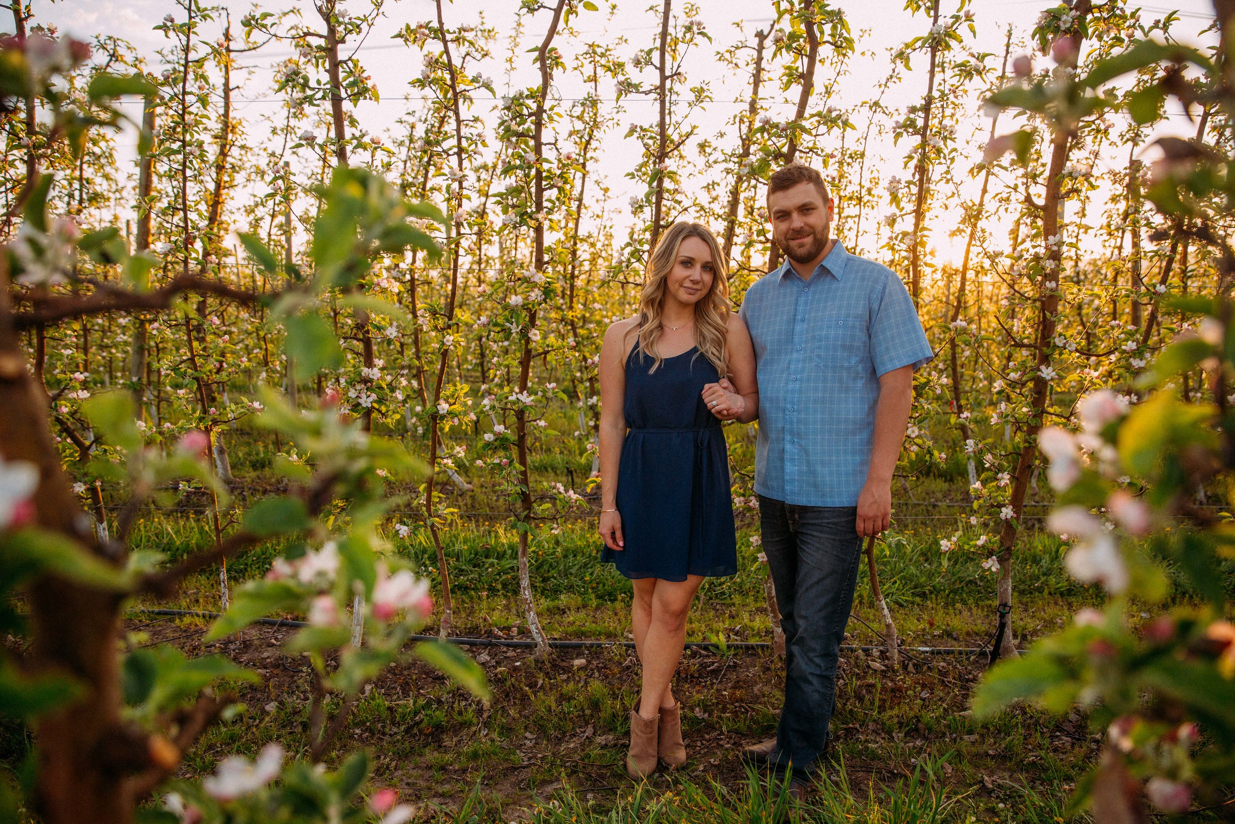 Apple tree engagement session in Kelowna