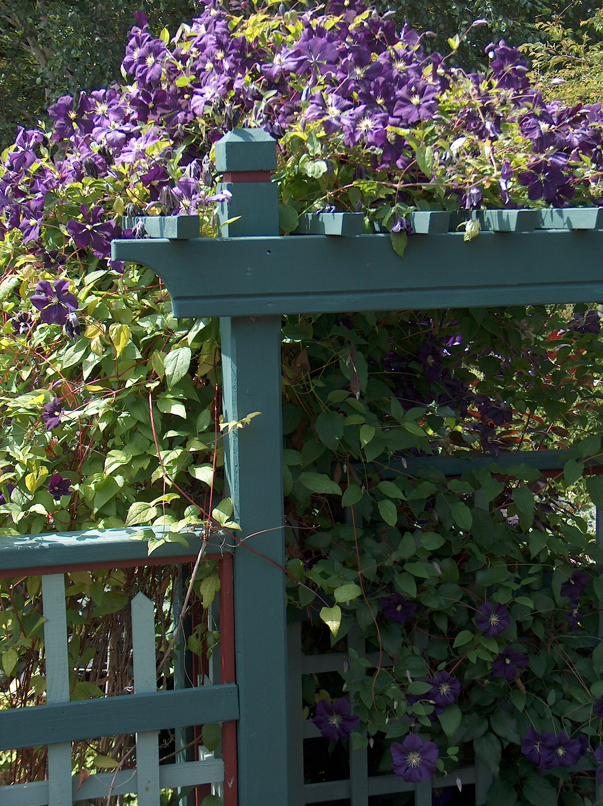 PurpleClematisArbor.jpg