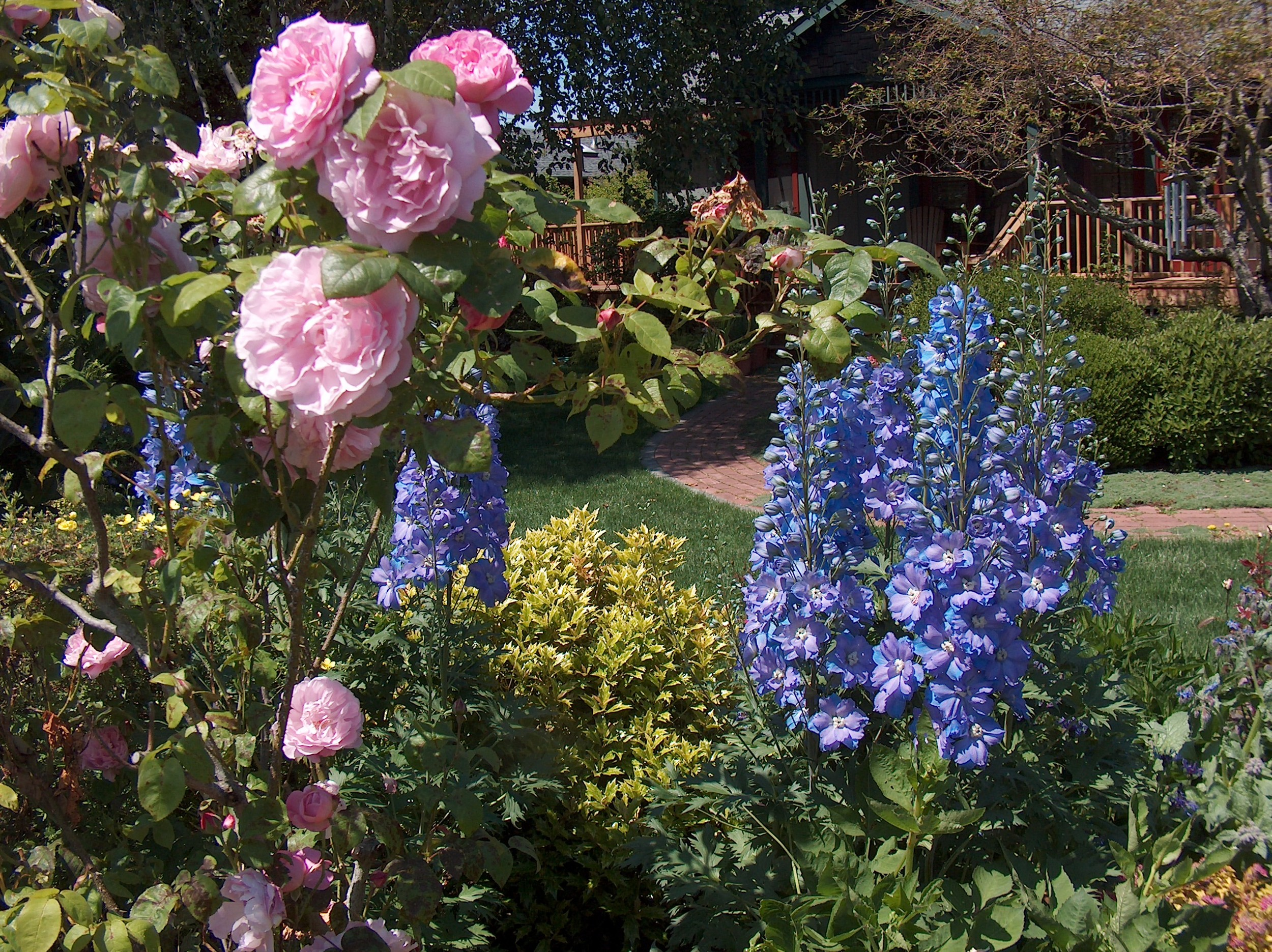 Roses&Dahlia1.JPG
