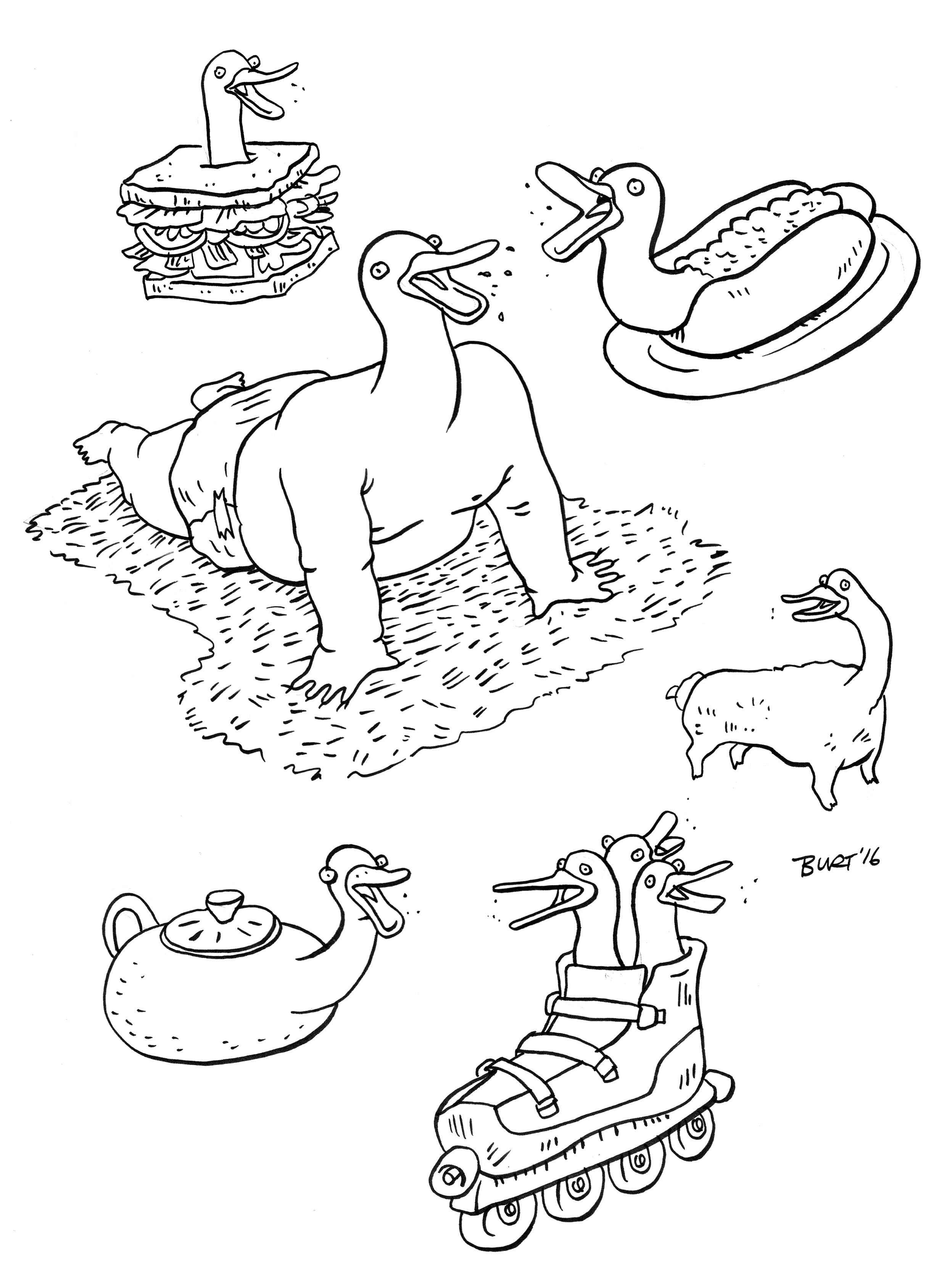 Ducks Are Fun