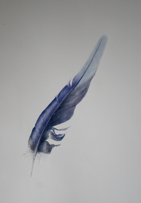 Rosella tail feather