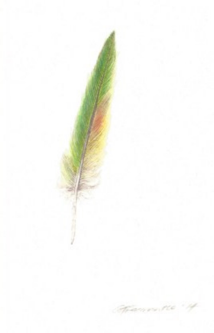Small Lorikeet feather