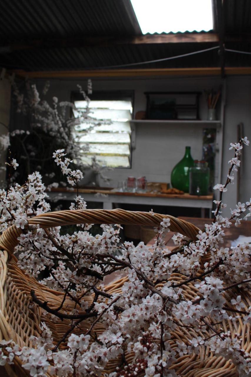 blossom on work bench.jpg
