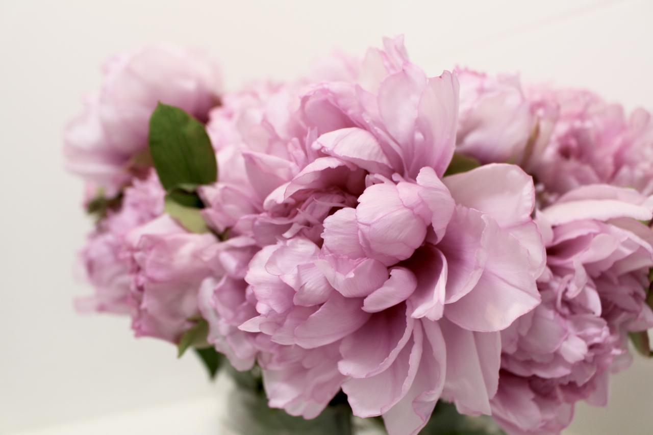Pink tree peonies.jpg