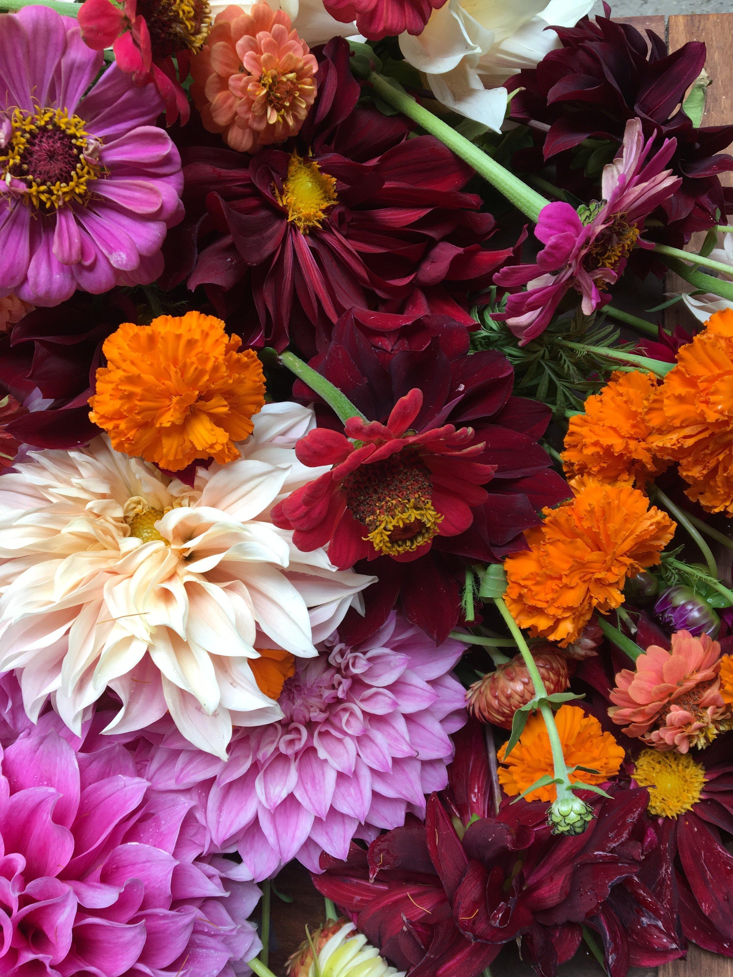 floral collection dalias, zinnias, marigolds.JPG