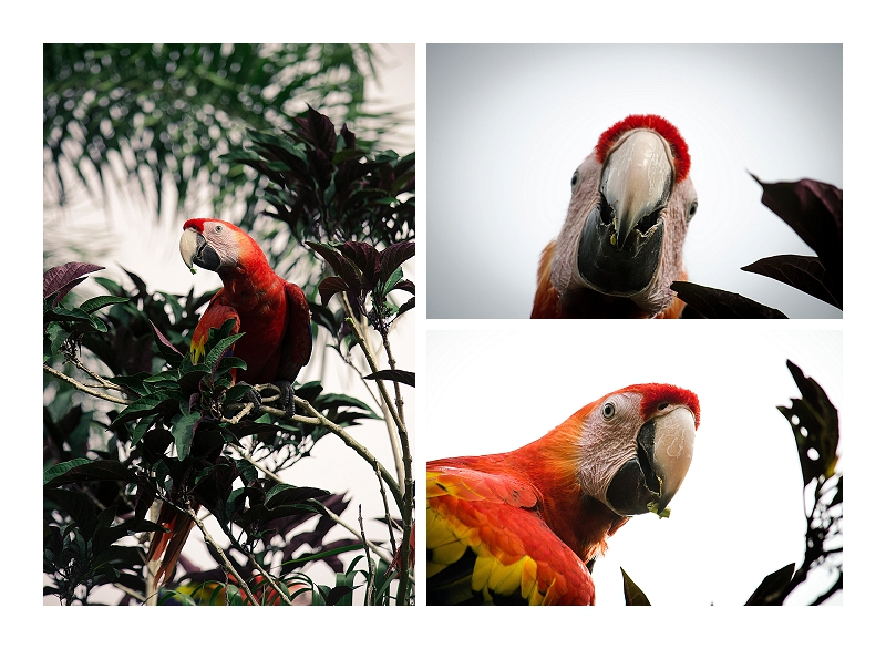 LDE Photography 2014