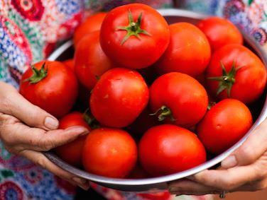 rosa holding tomatoes.jpg