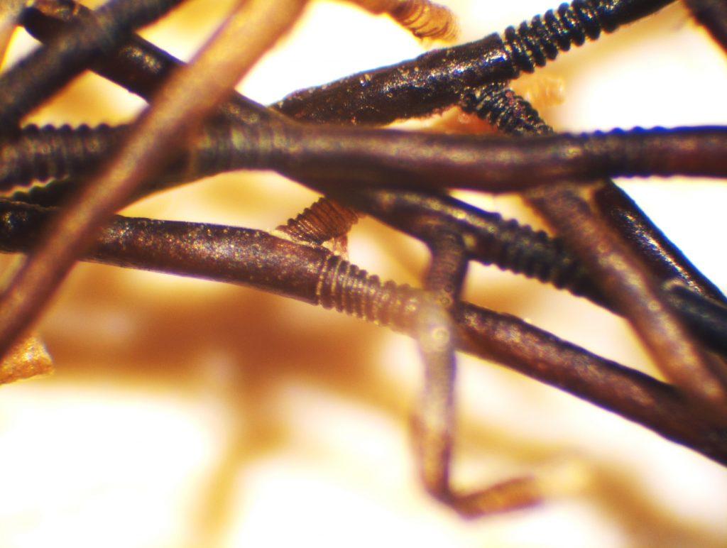 Figure 12: Seaweed