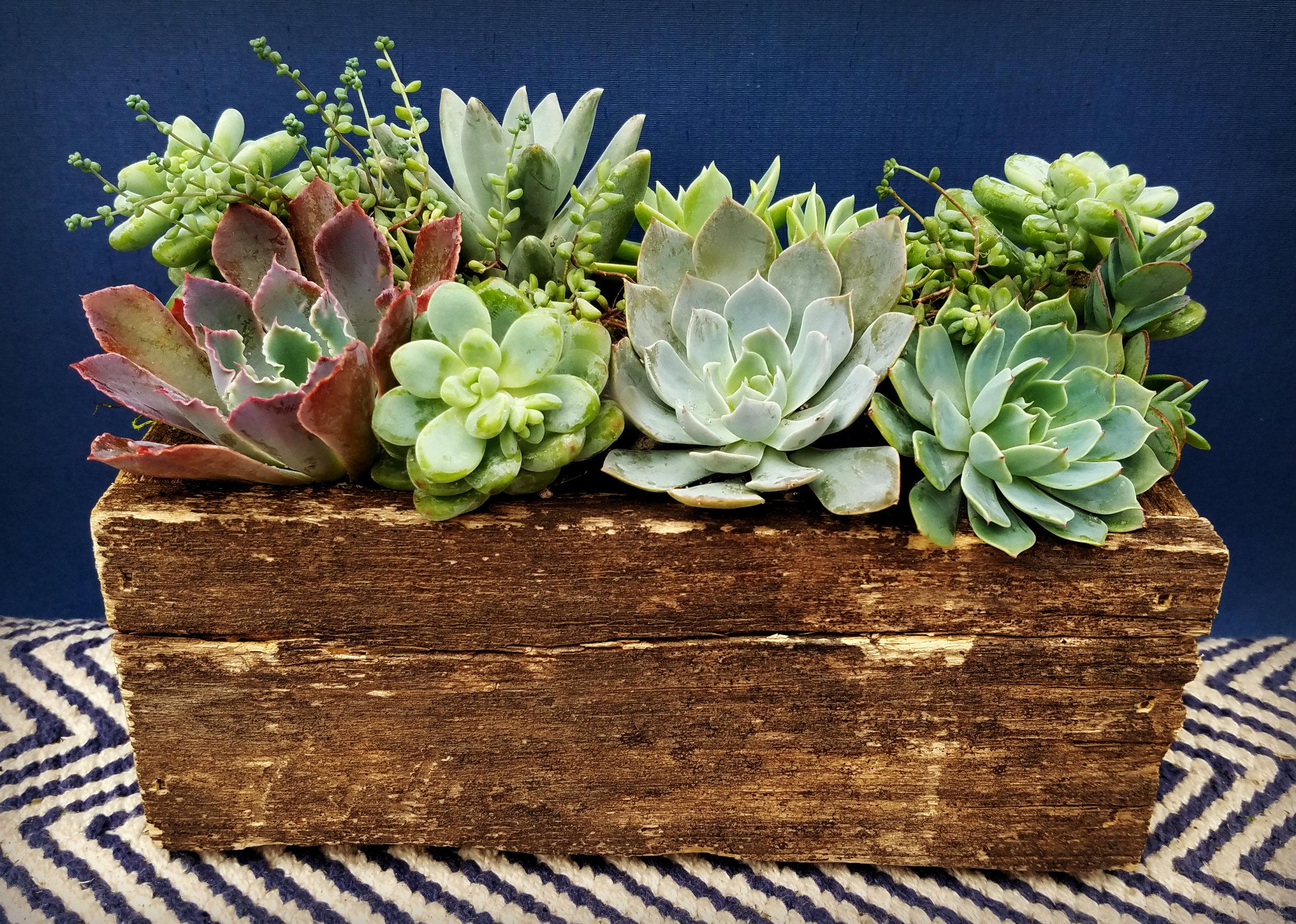 Wooden Succulent Container.jpg