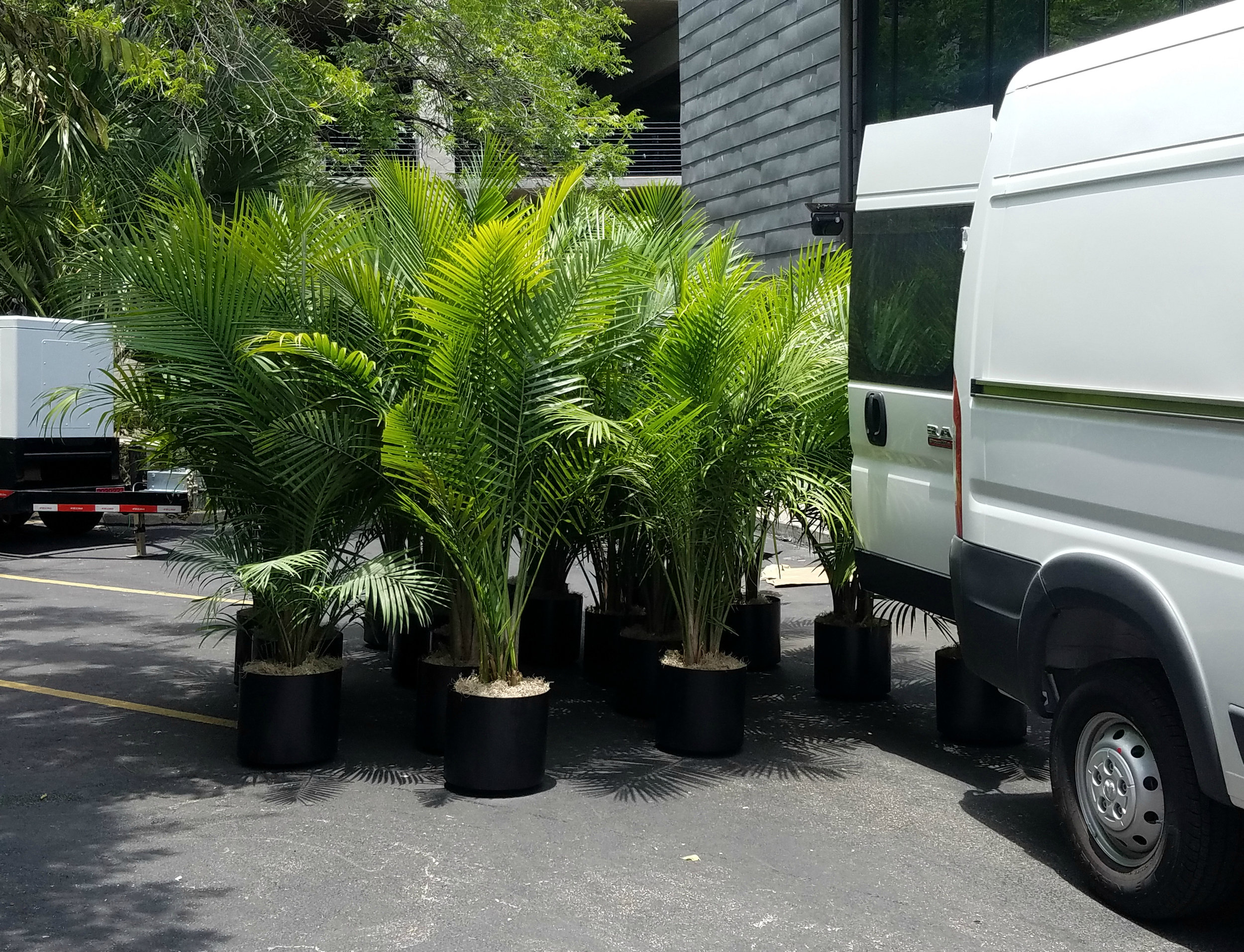Plant Rental Houston