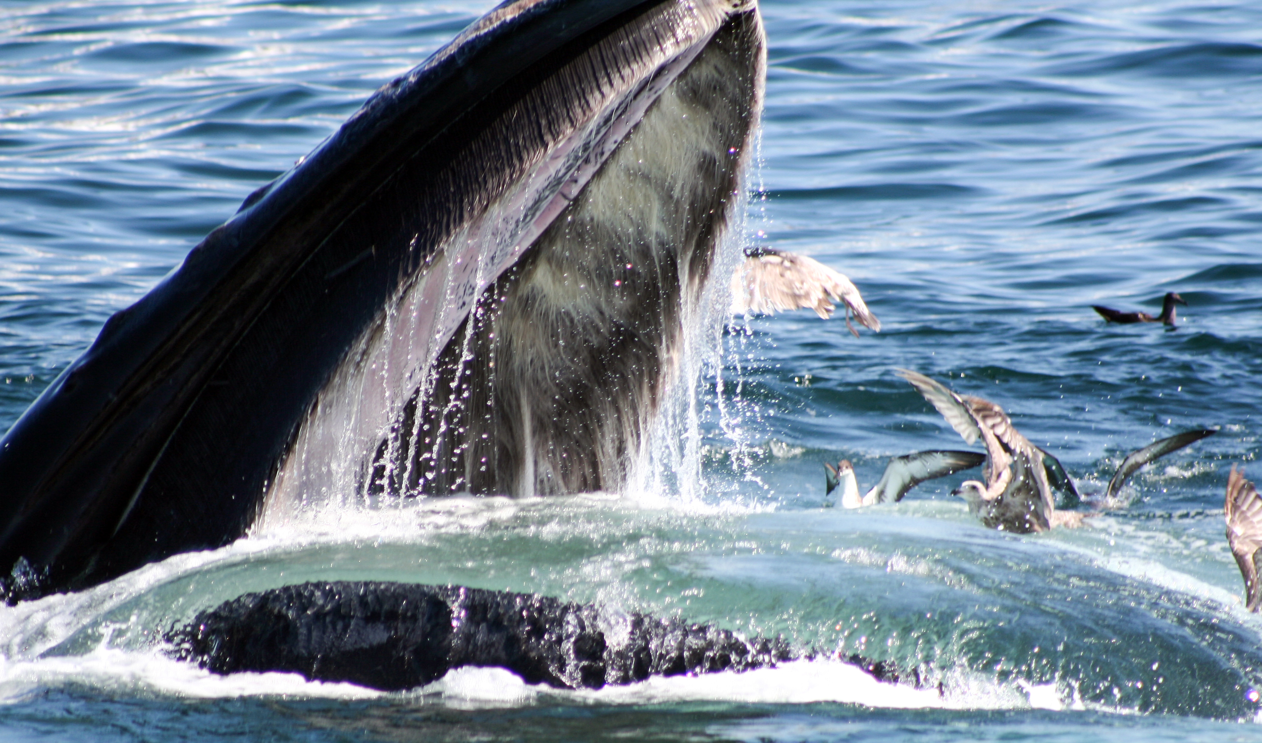 other-humpback2.jpg