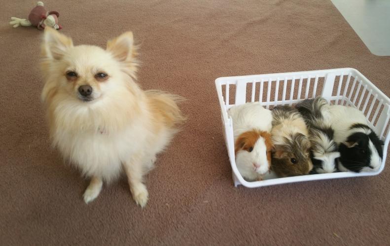 Sunny meets the piggies.jpg