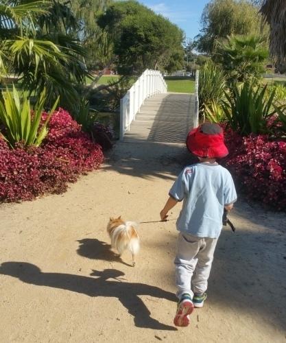 Sunny goes on a walk.jpg