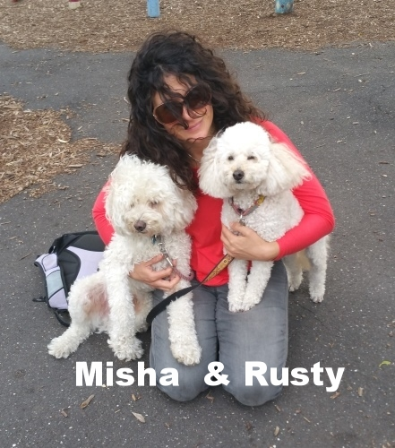 Walkies with Misha and Rusty.jpg